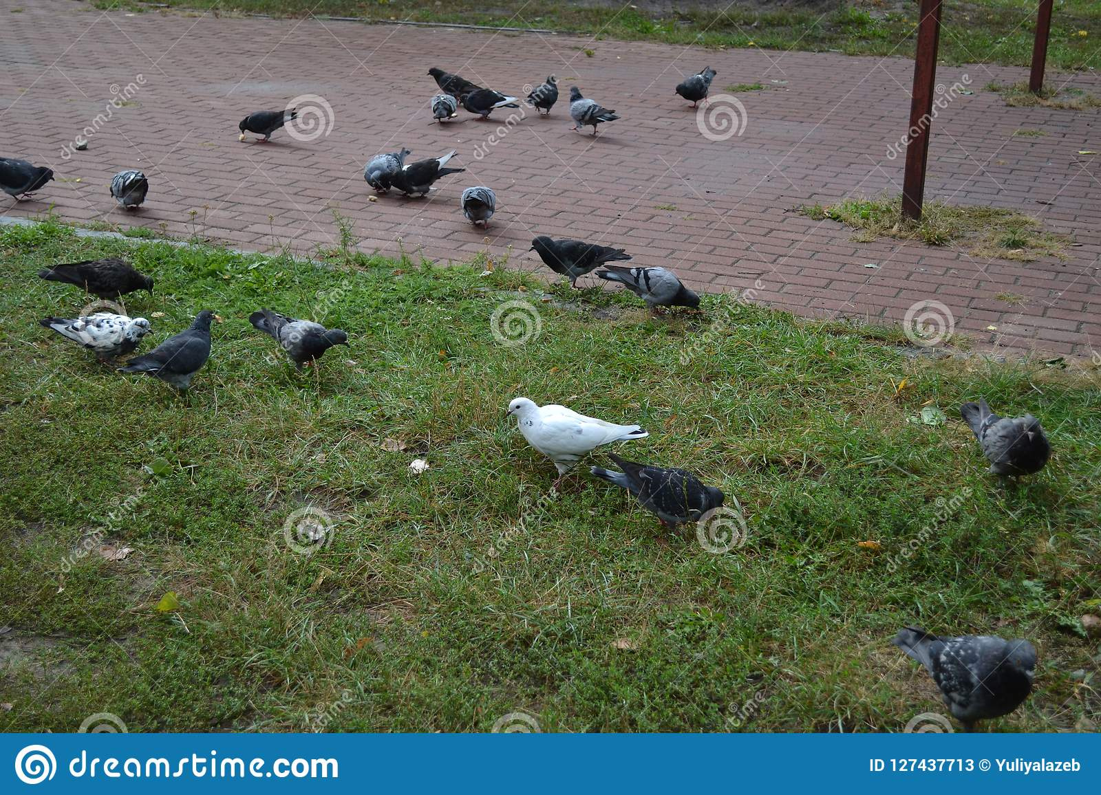 Pigeons on the playground, autumn day
