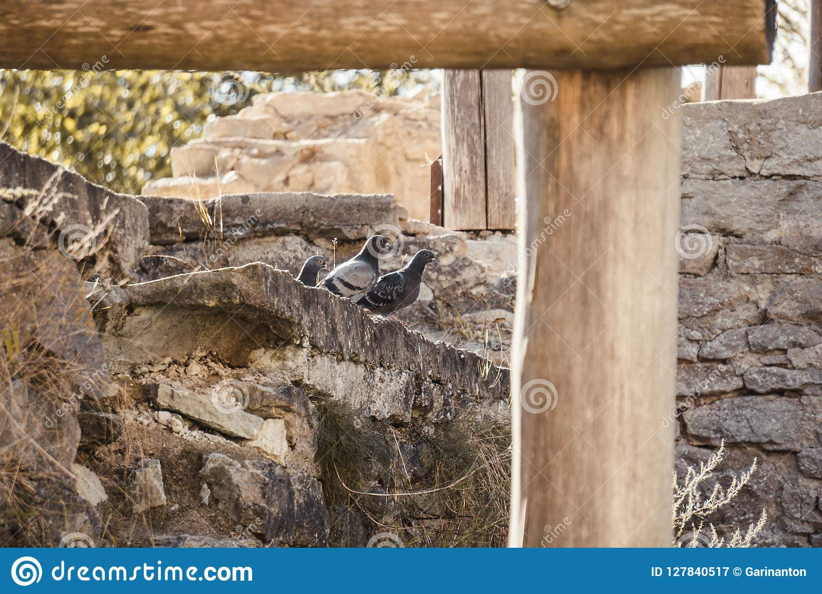 Pigeons on the stone wall of an ancient monastery
