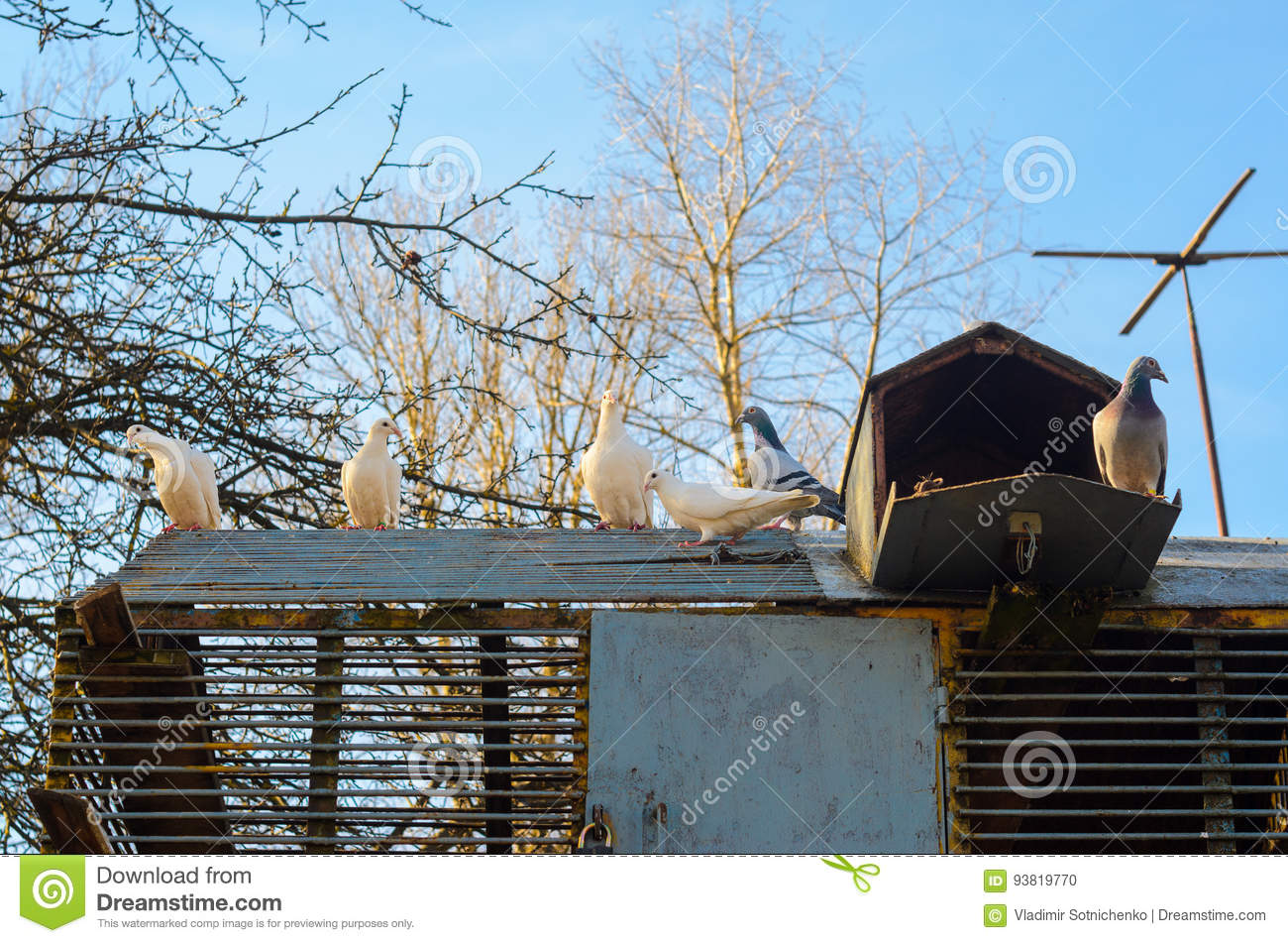 pigeons sur le toit d 39 un colombier photo stock image 93819770. Black Bedroom Furniture Sets. Home Design Ideas