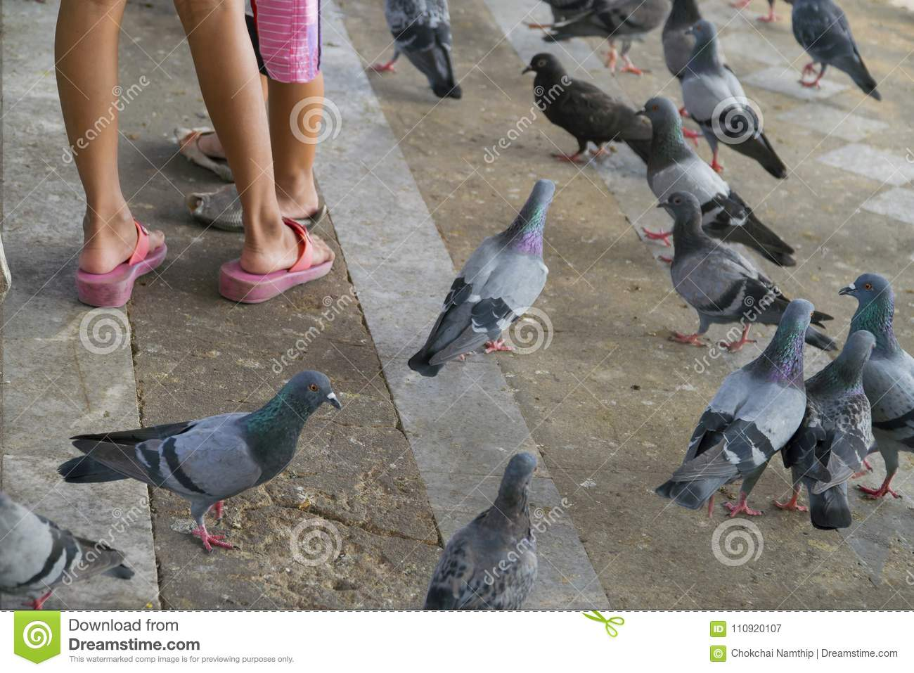 Pigeons Walking On The Floor And Baby Legs. Stock Image ...