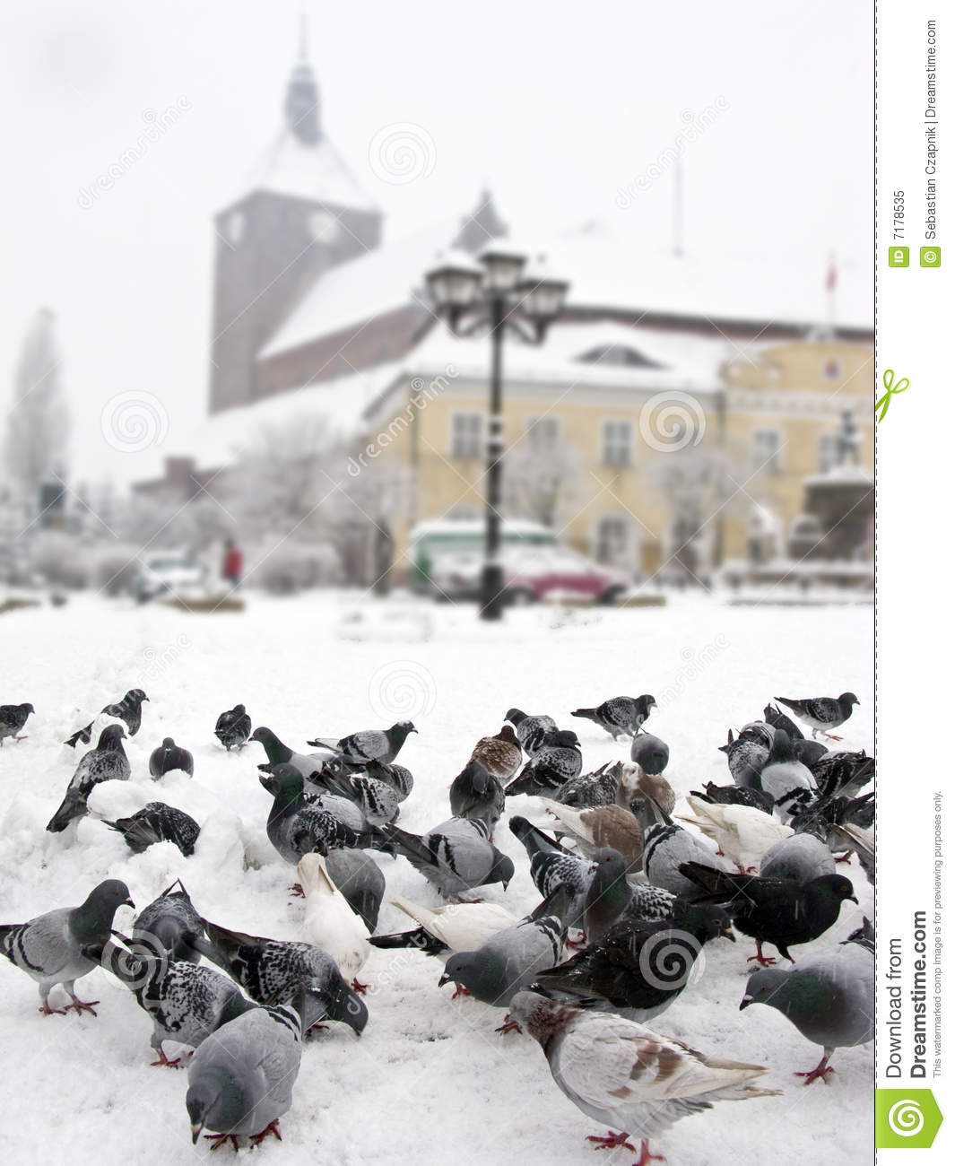 Pigeons in winter city