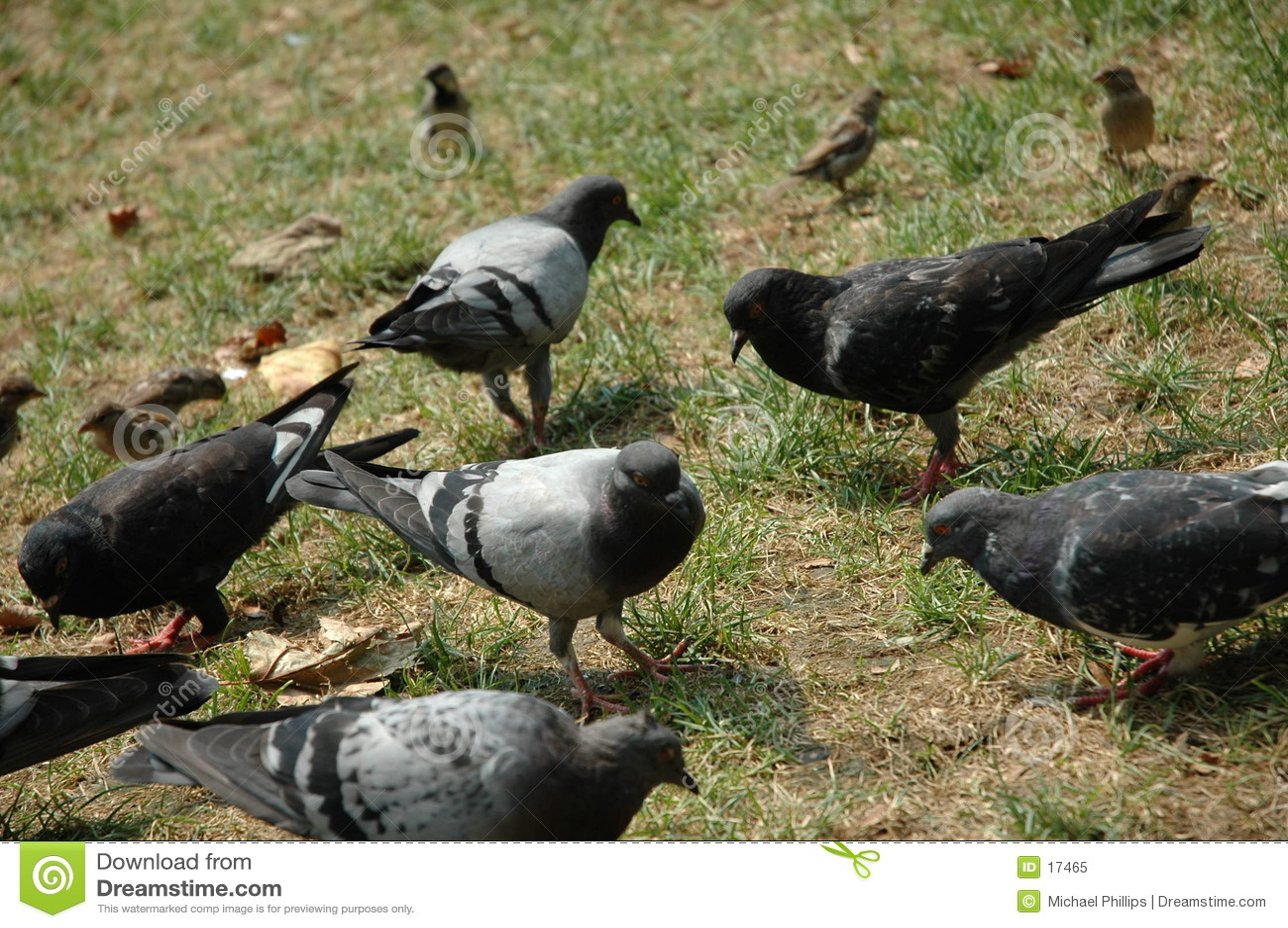 Pigeonsinthepark
