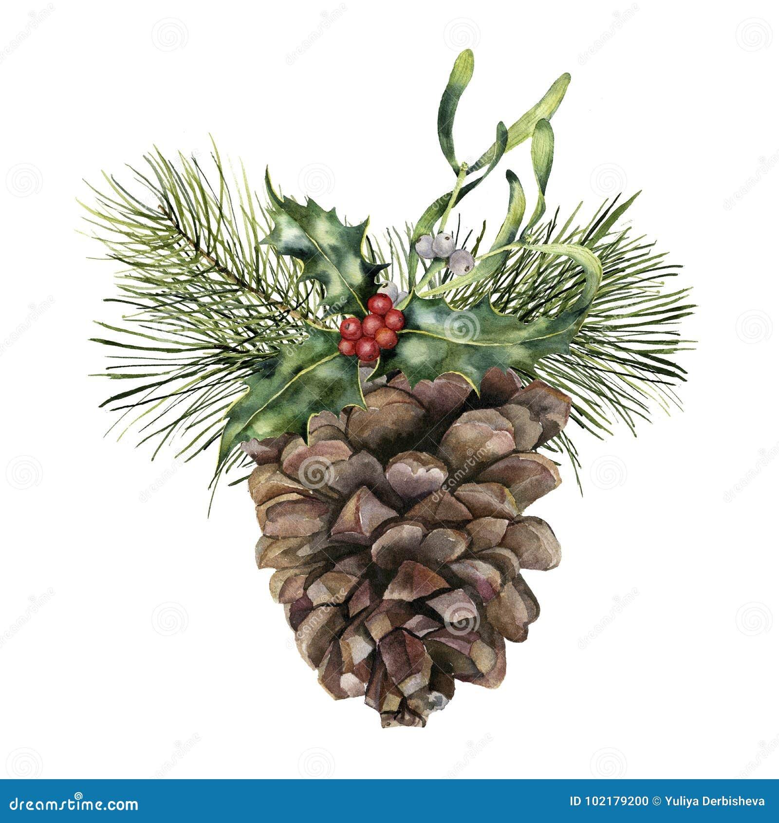 Pigna dell acquerello con la decorazione di Natale Pigna dipinta a mano con il ramo, l agrifoglio ed il vischio dell albero di Na