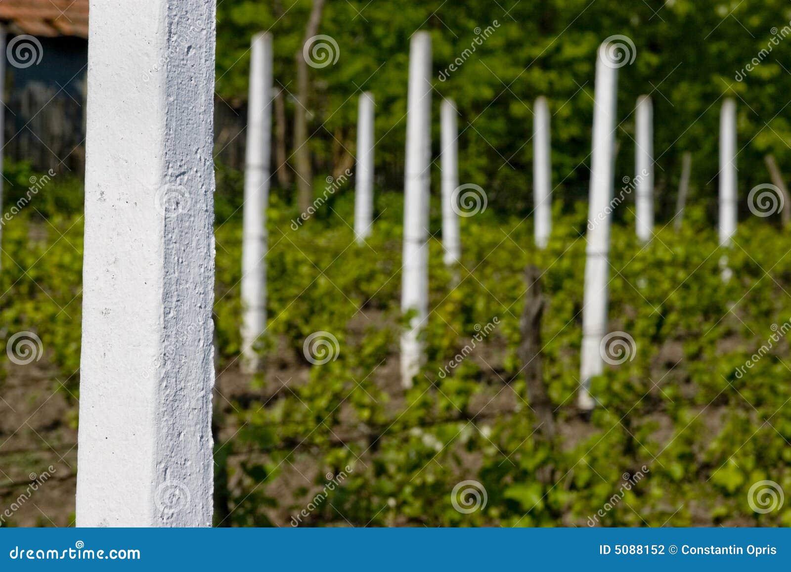 Pijlers in wijngaard