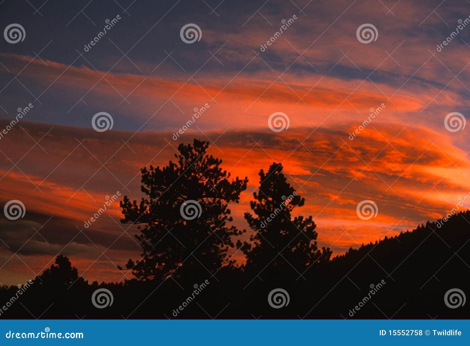 Pijnbomen bij Zonsondergang