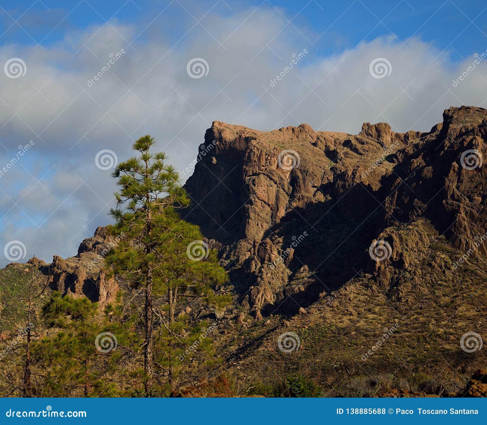 Pijnbomen en klippen, La Plata, Gran Canaria