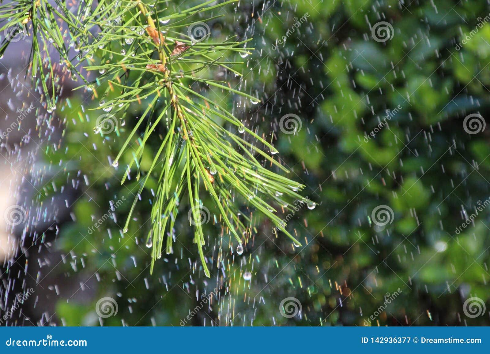 Pijnbomen onder de Regenboog