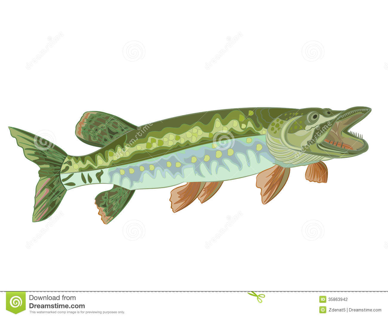 pike  esox  stock photography image 35863942 free rainbow fish clipart rainbow fish clip art to print black and white
