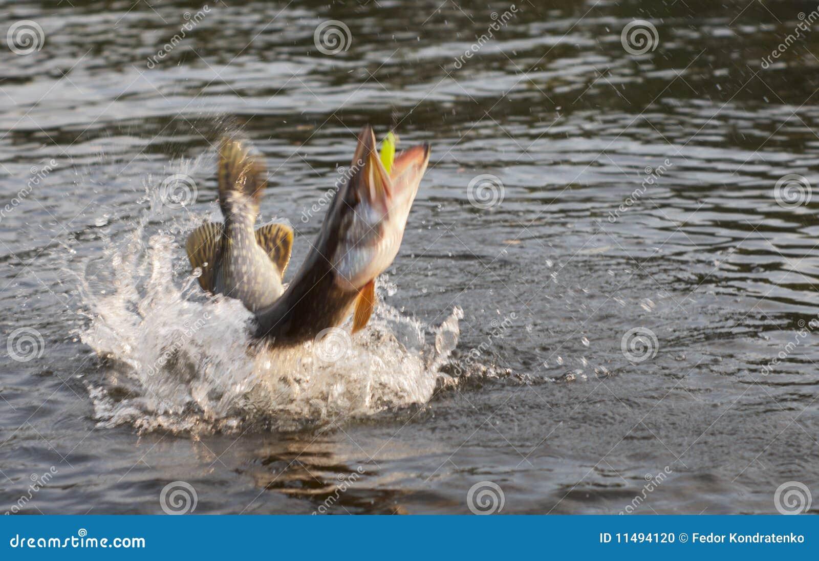 Pike no borrão de movimento do gancho