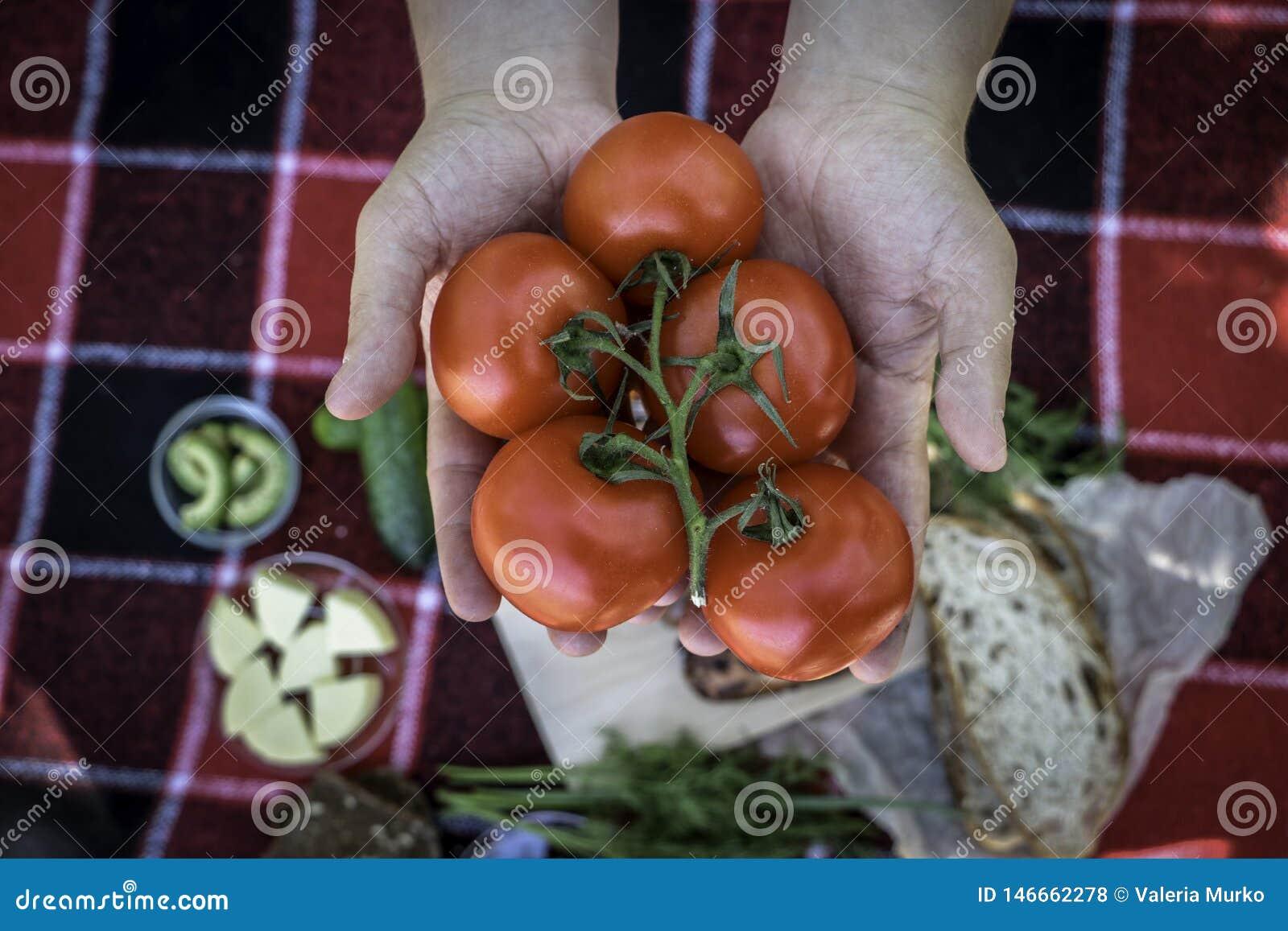 Piknik Czerwona szkocka krata ?wiezi warzywa, chleb na kt?rym k?ama pyknicznego jedzenie, grill, kie?basy na ogieniu Sk?ad, ?wie?