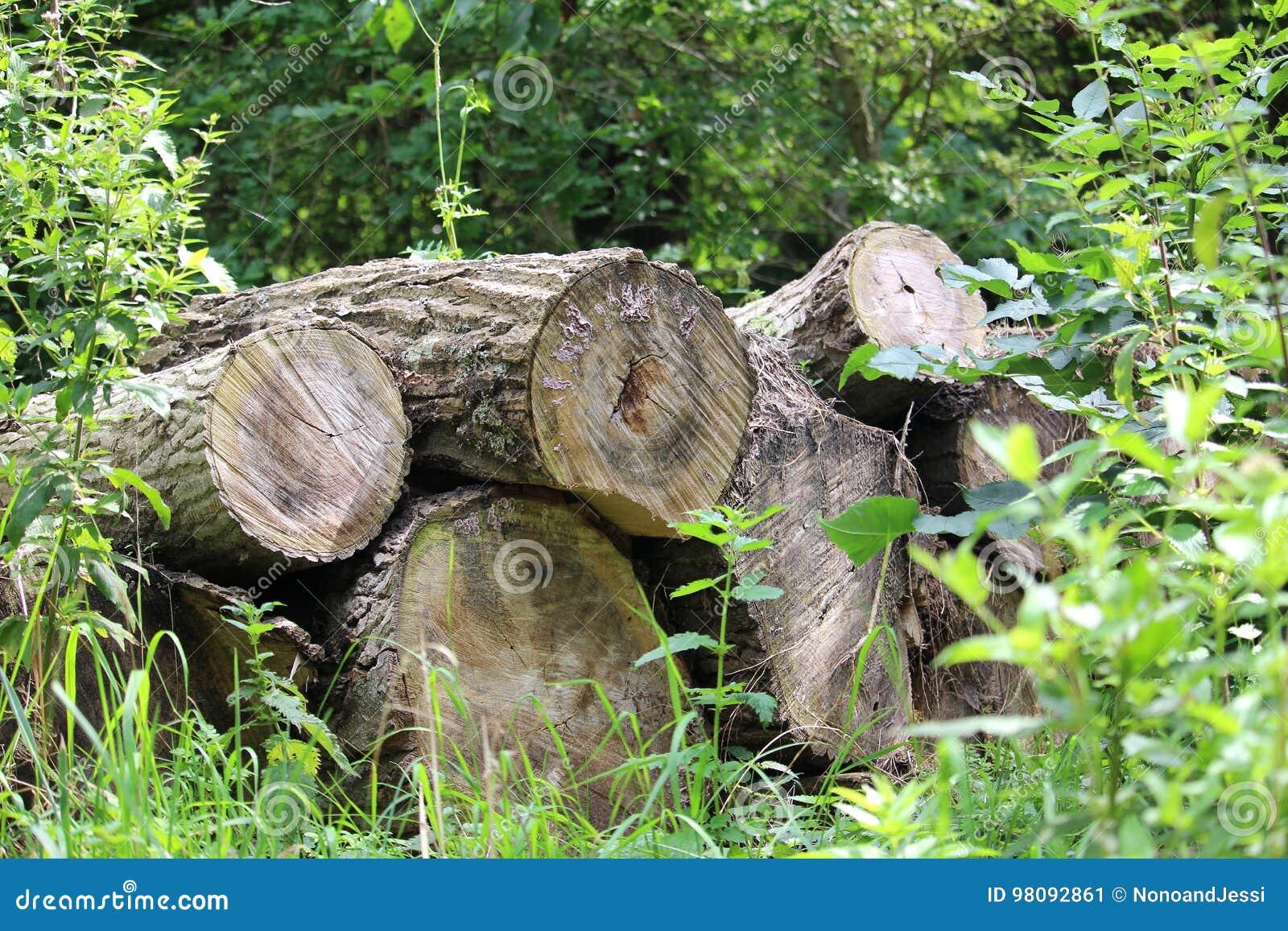 Pila dei tronchi di albero sopra a vicenda