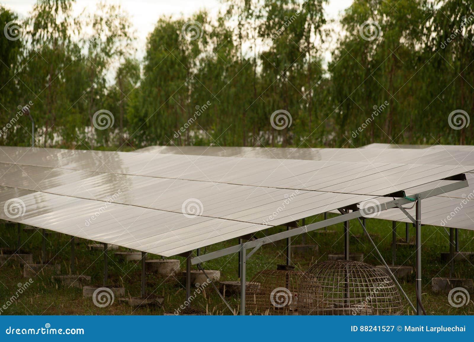 Pila solare dei pannelli solari in azienda agricola solare con