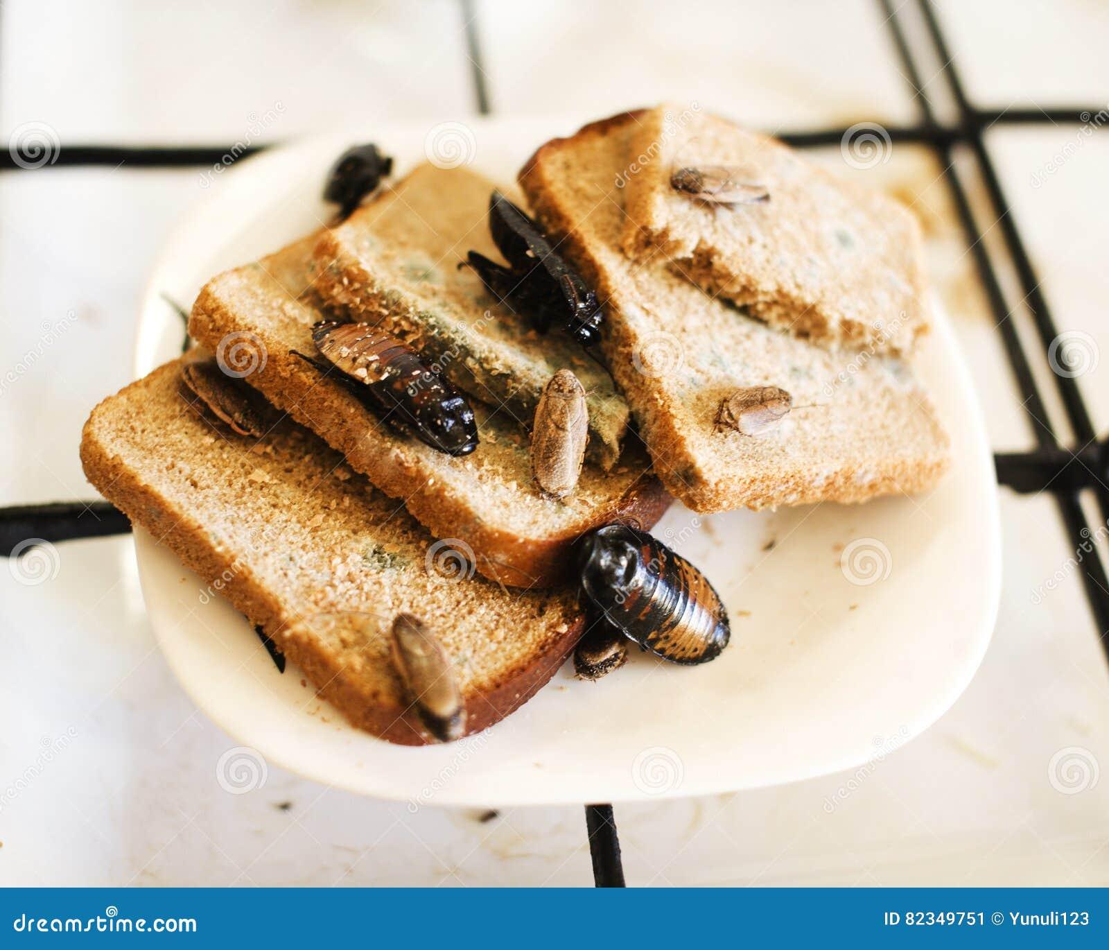 Bonito cucarachas en la cocina fotos cocina de la for Como eliminar cucarachas pequenas en casa