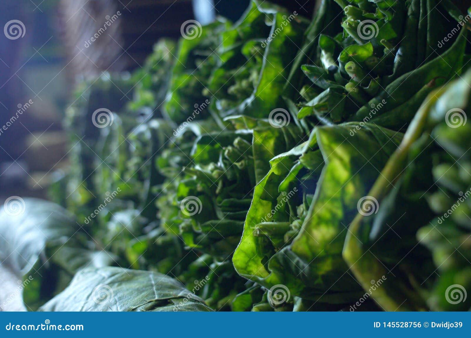 Pilas de hojas maduras del tabaco