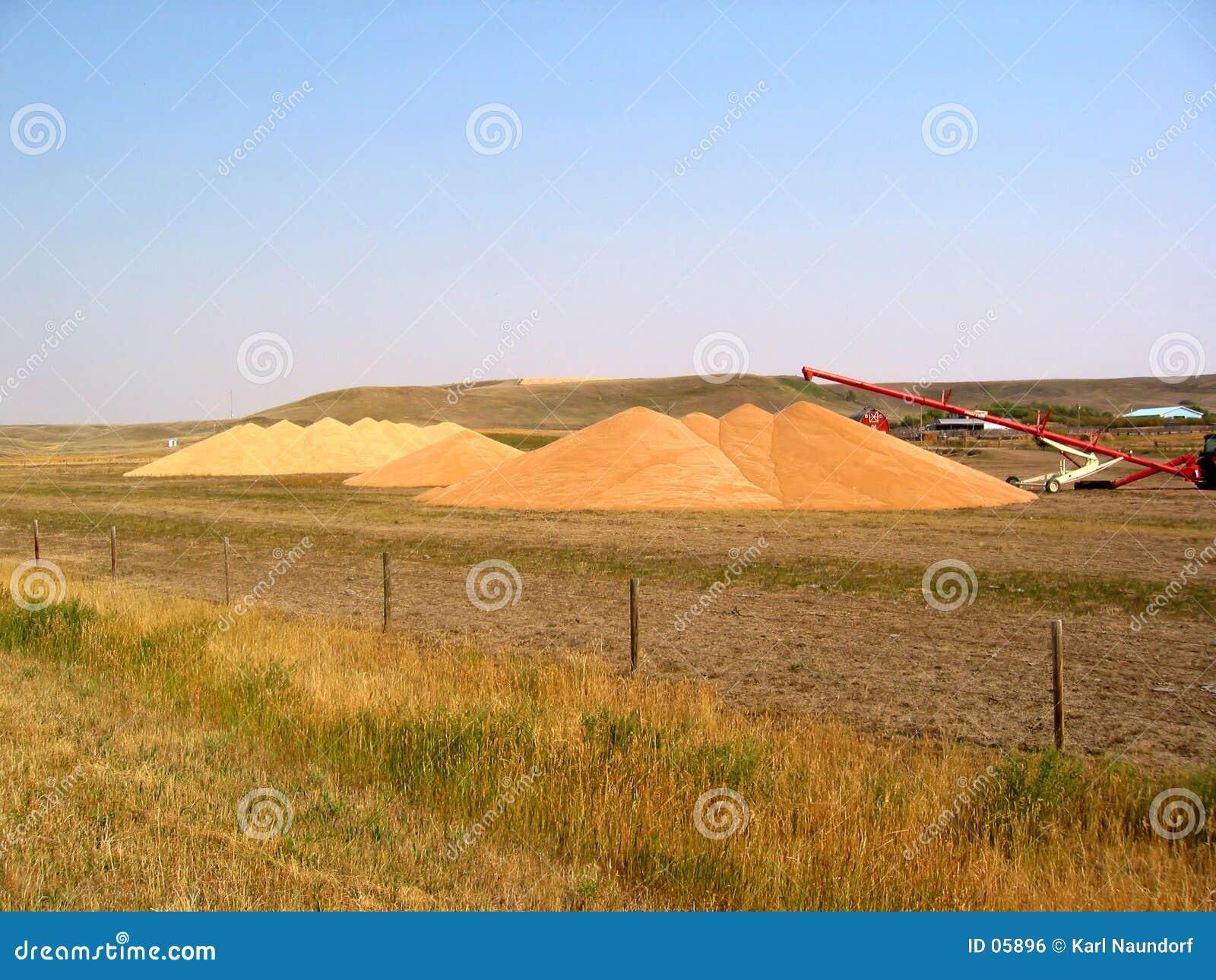 Pilas del grano