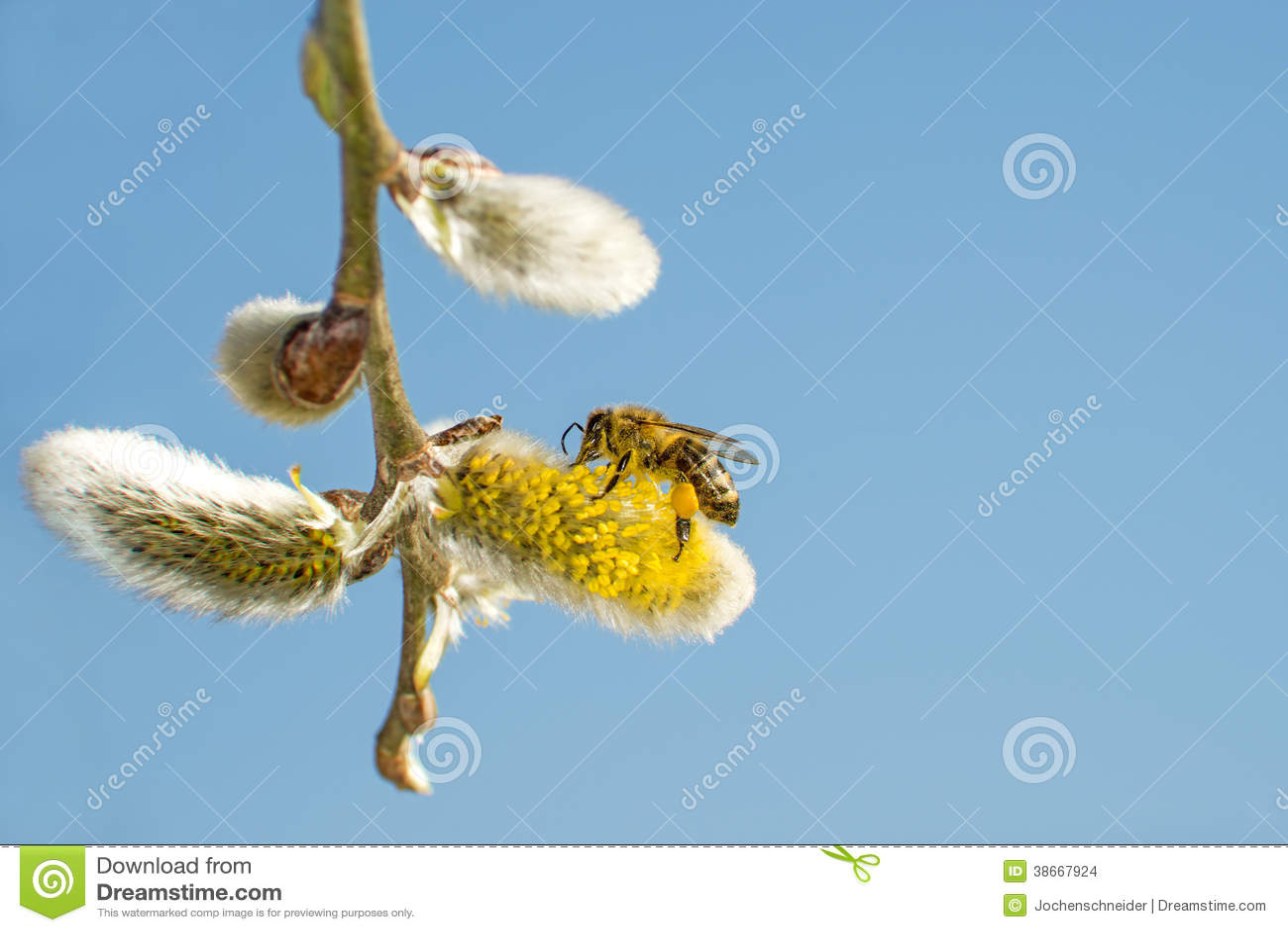 Pilblomning med biet