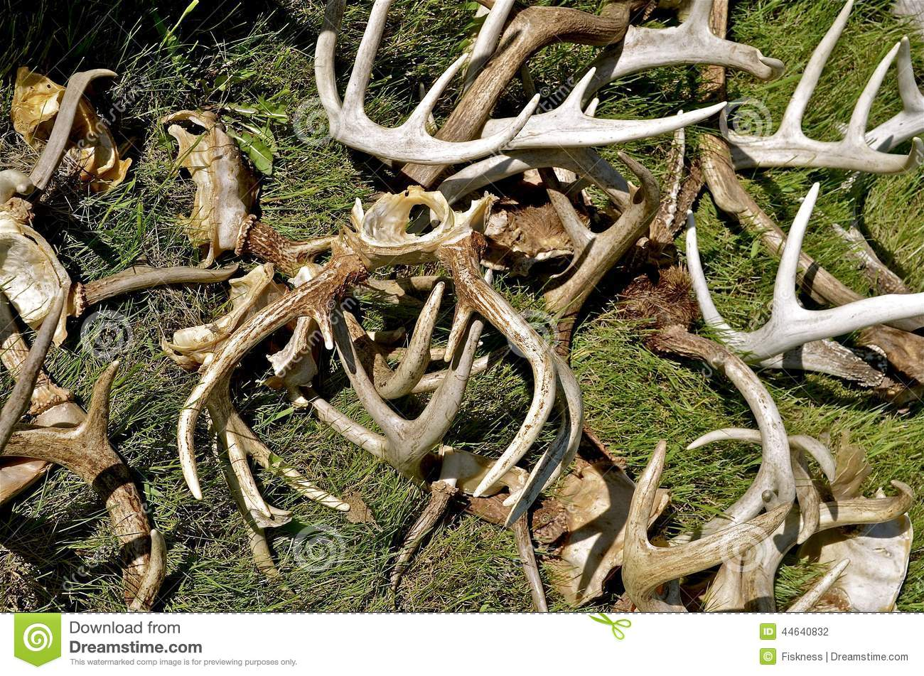 Pile of antlers