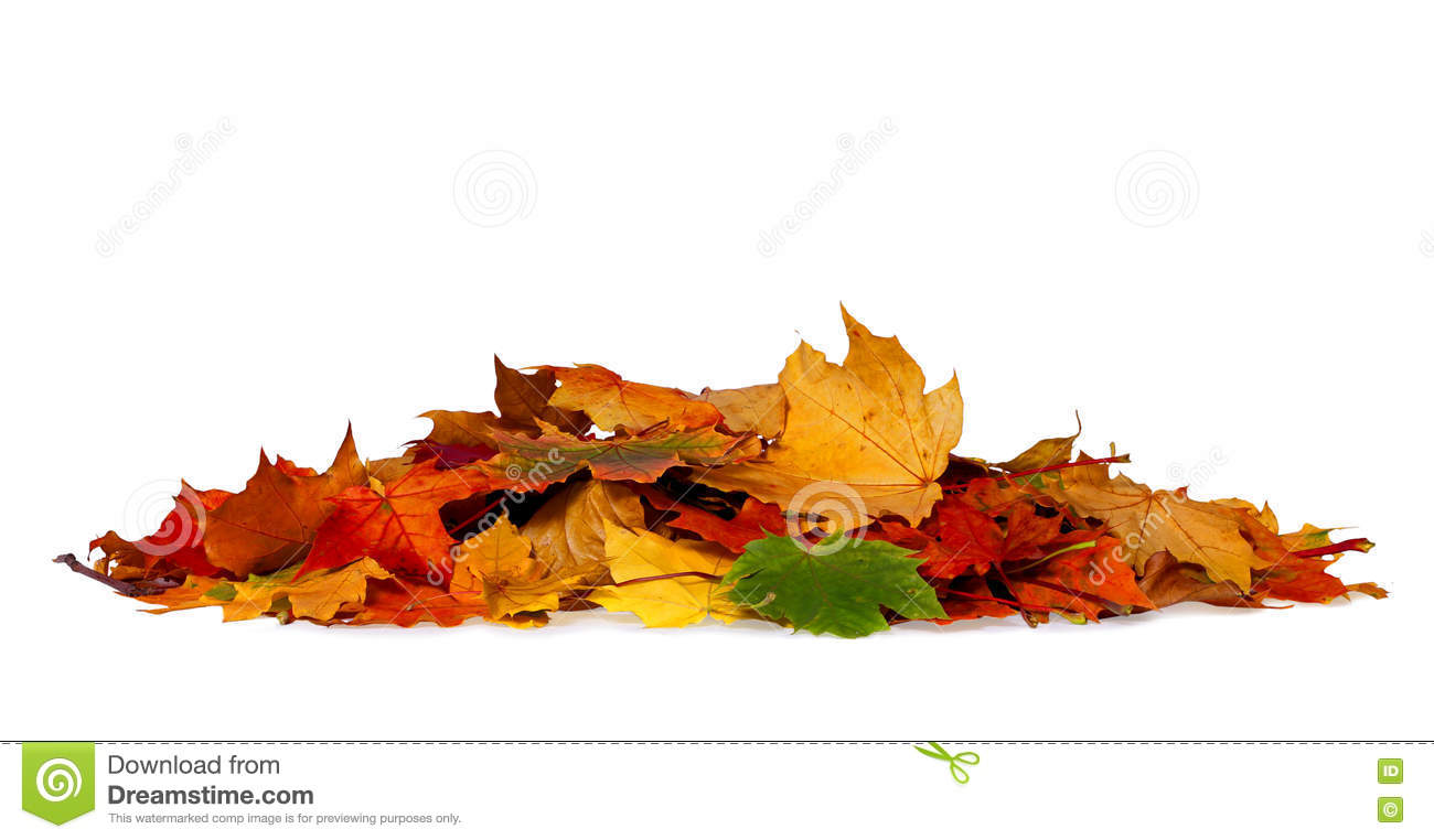 Pile of autumn colored leaves isolated on white background