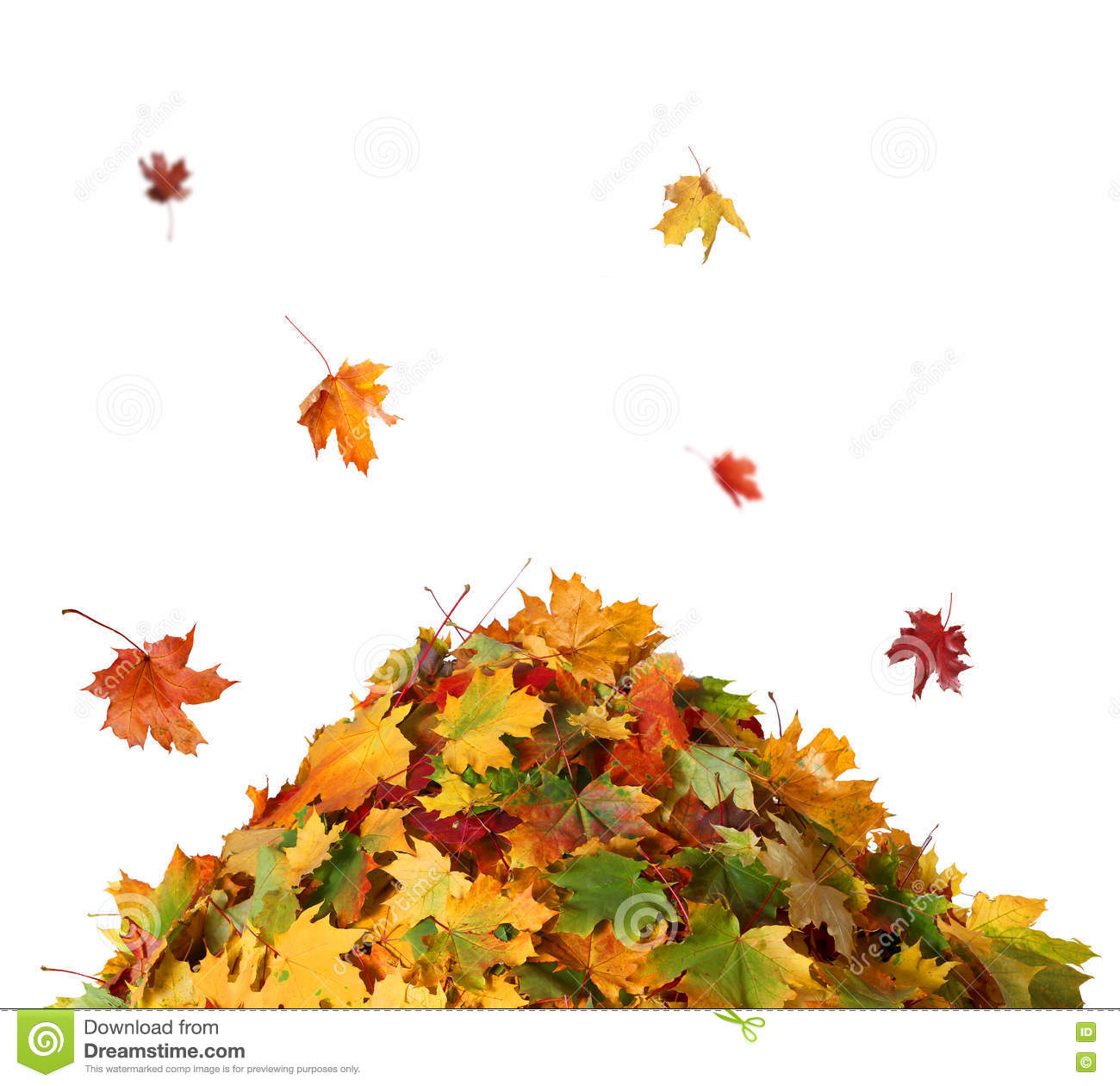 Pile of autumn colored leaves isolated on white background.
