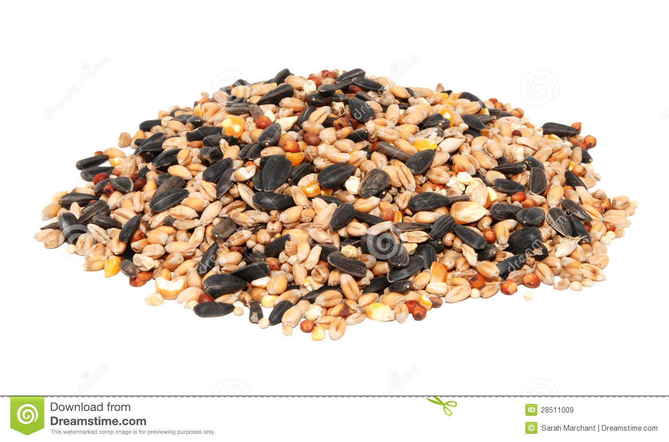 Pile of bird seed including sunflower seeds, wheat and maize, isolated ...