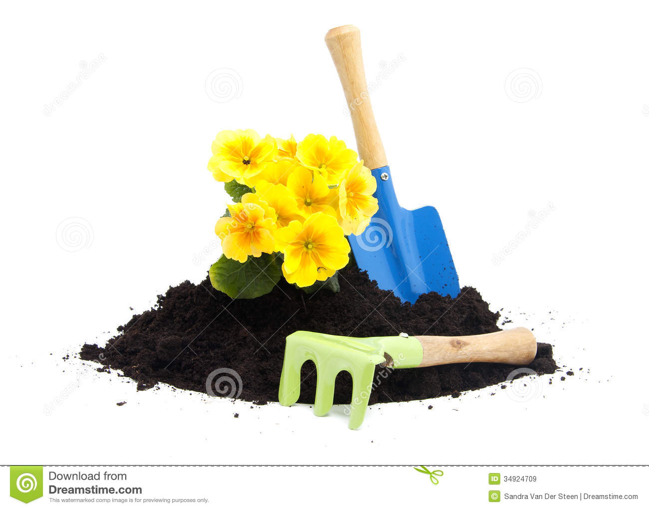 Pile of black garden soil with primula flower and tools for Soil utensils