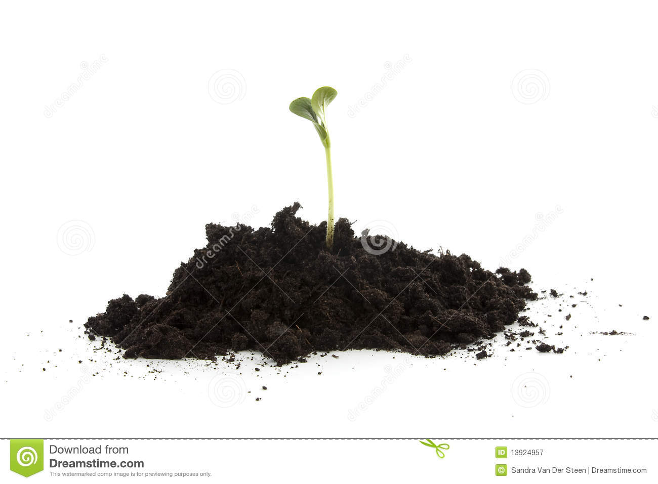 Pile of black garden soil with young plant royalty free for Black garden soil