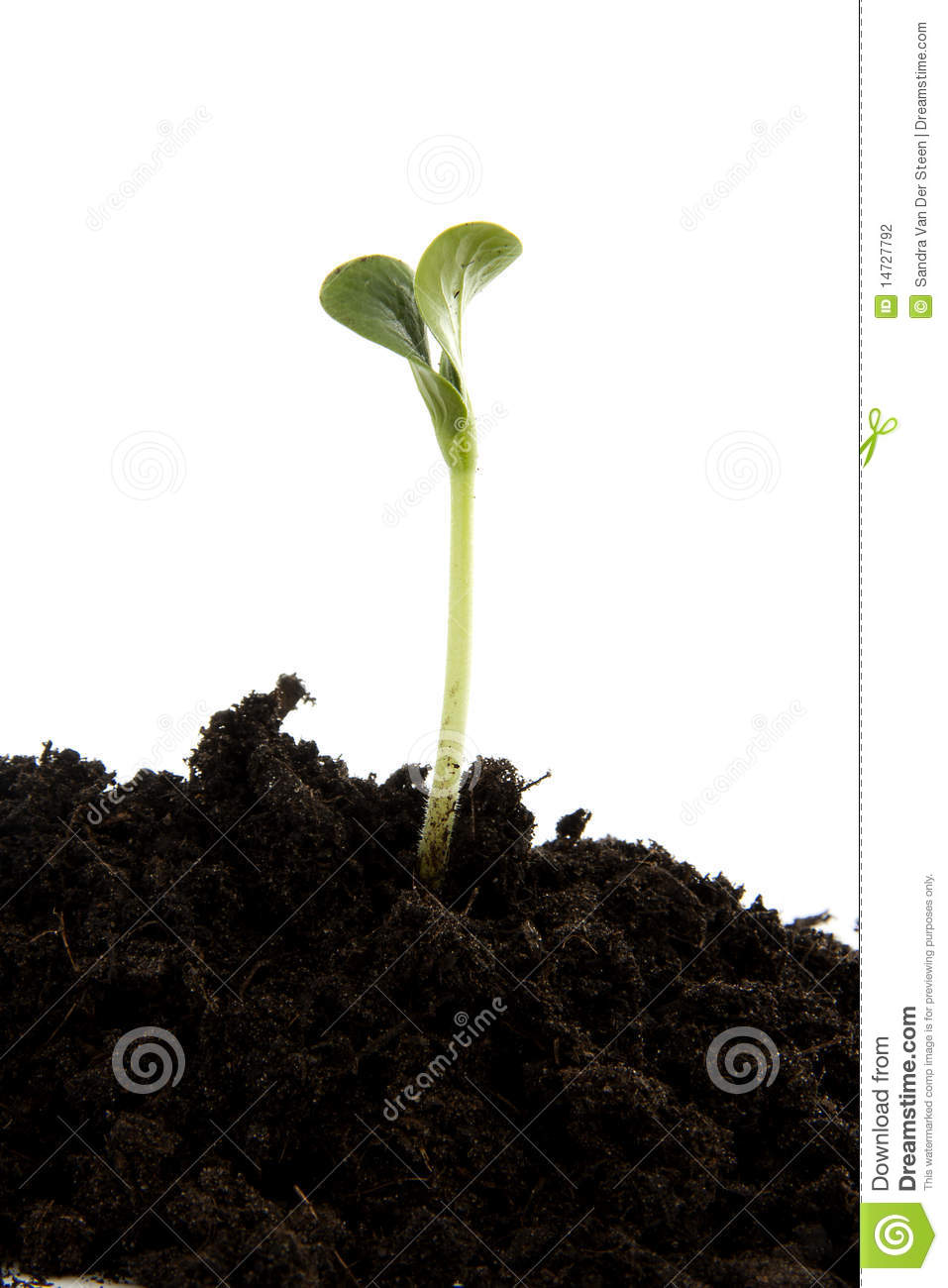 Pile of black garden soil with young plant stock for Soil young s modulus