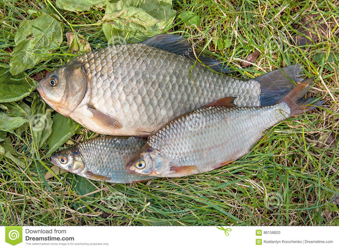 What to catch a crucian