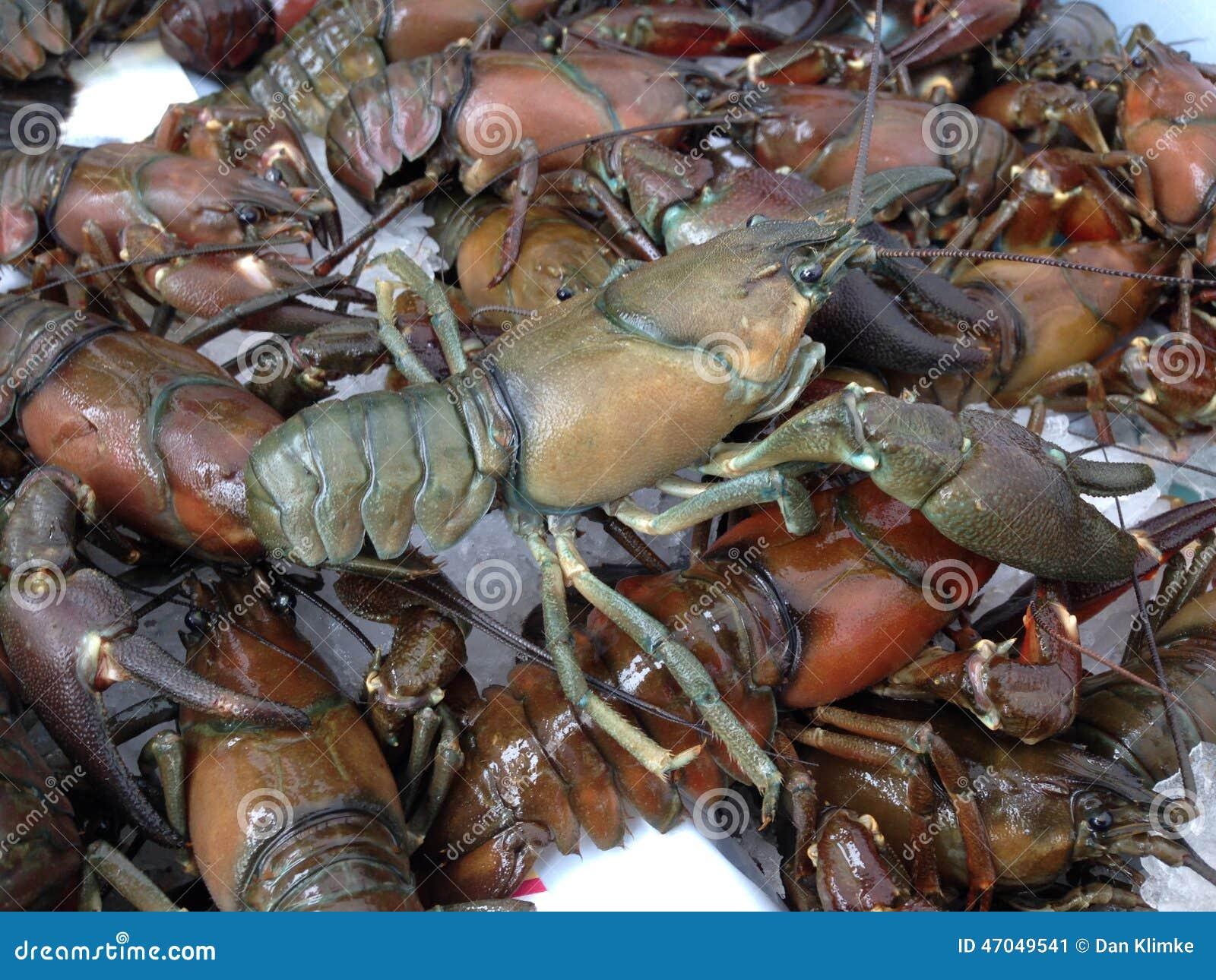 Pile Of Crawfish Ready To Eat Stock Image Image: 21698861