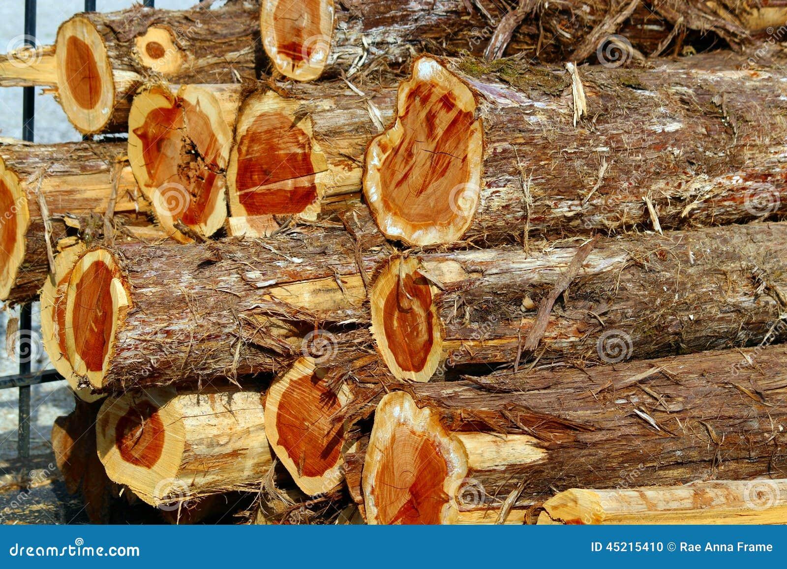Pile de Cedar Logs