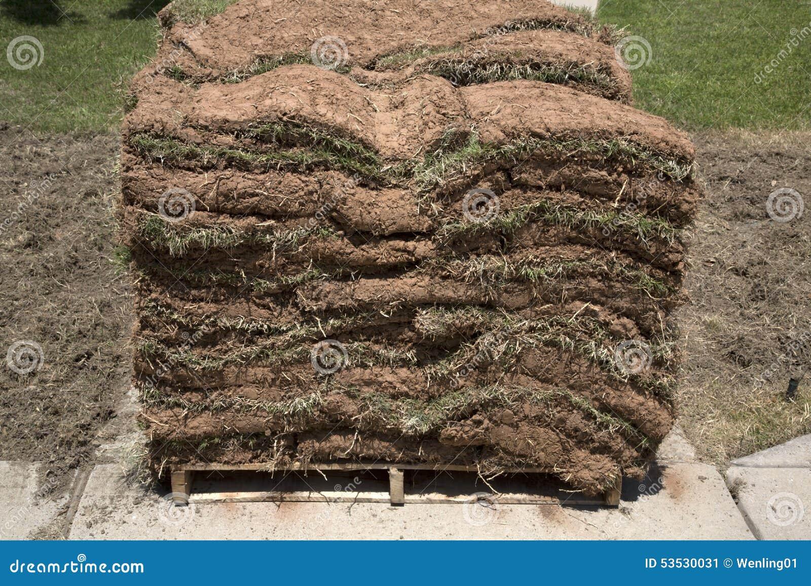 Pile de nouveau gazon de pelouse