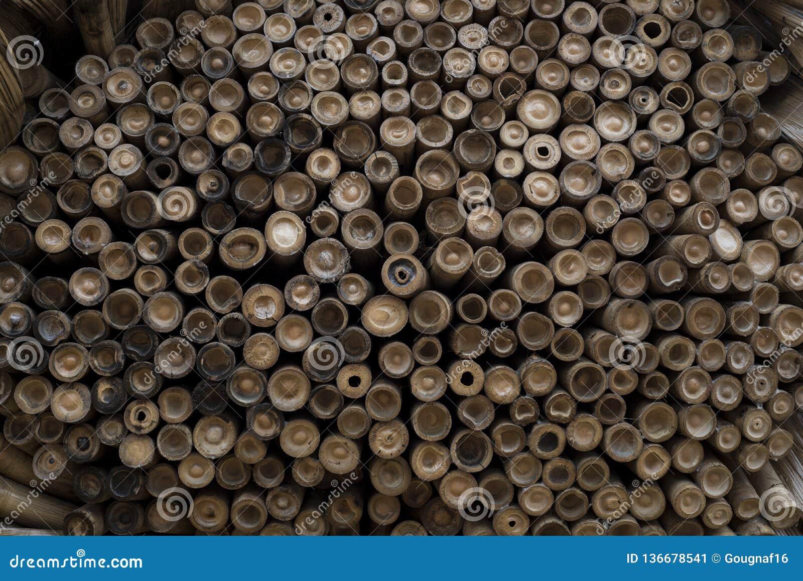 Pile des bambous vus de l extrémité coupée