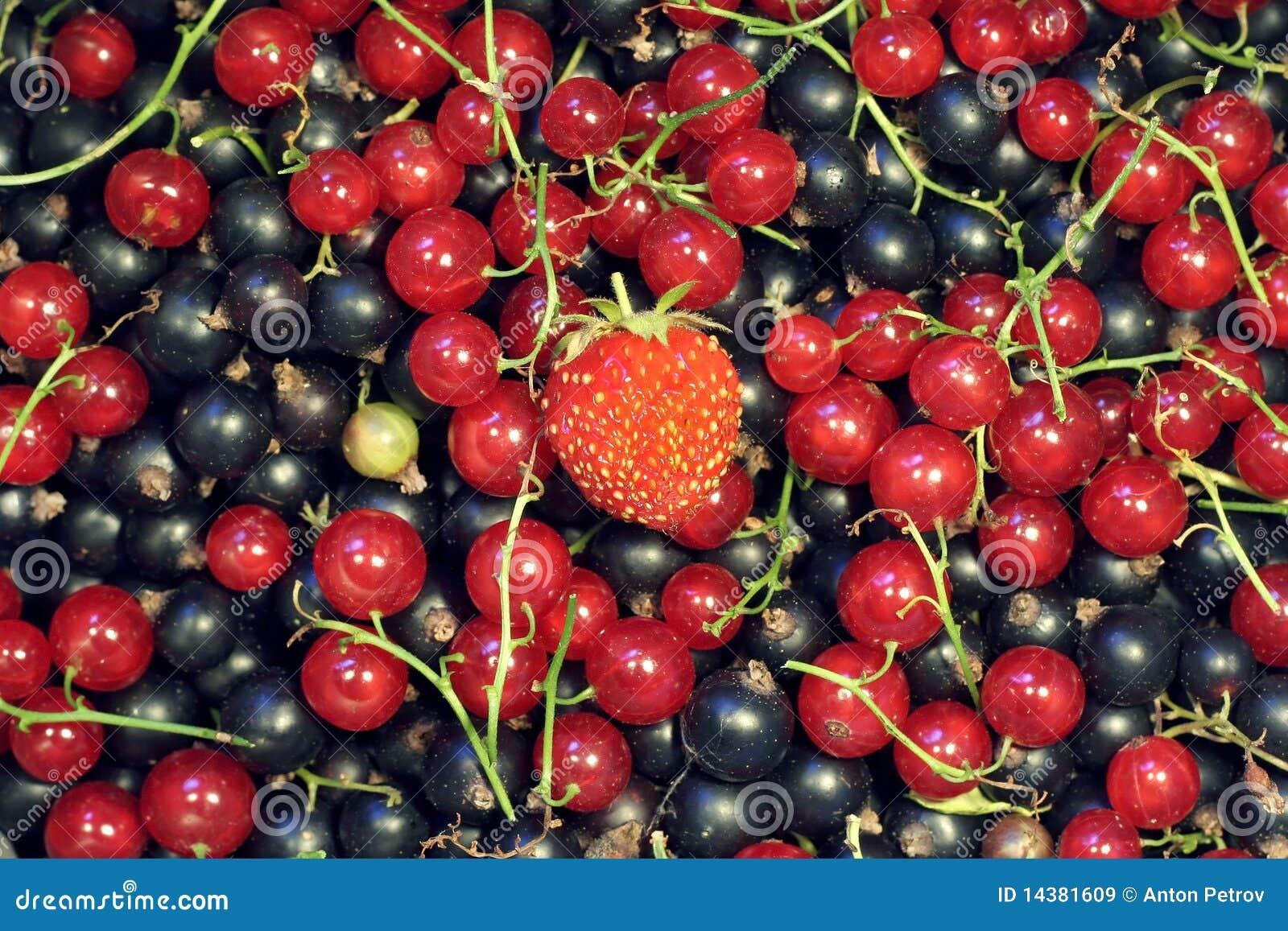 Pile des corinthes avec une fraise sur le dessus