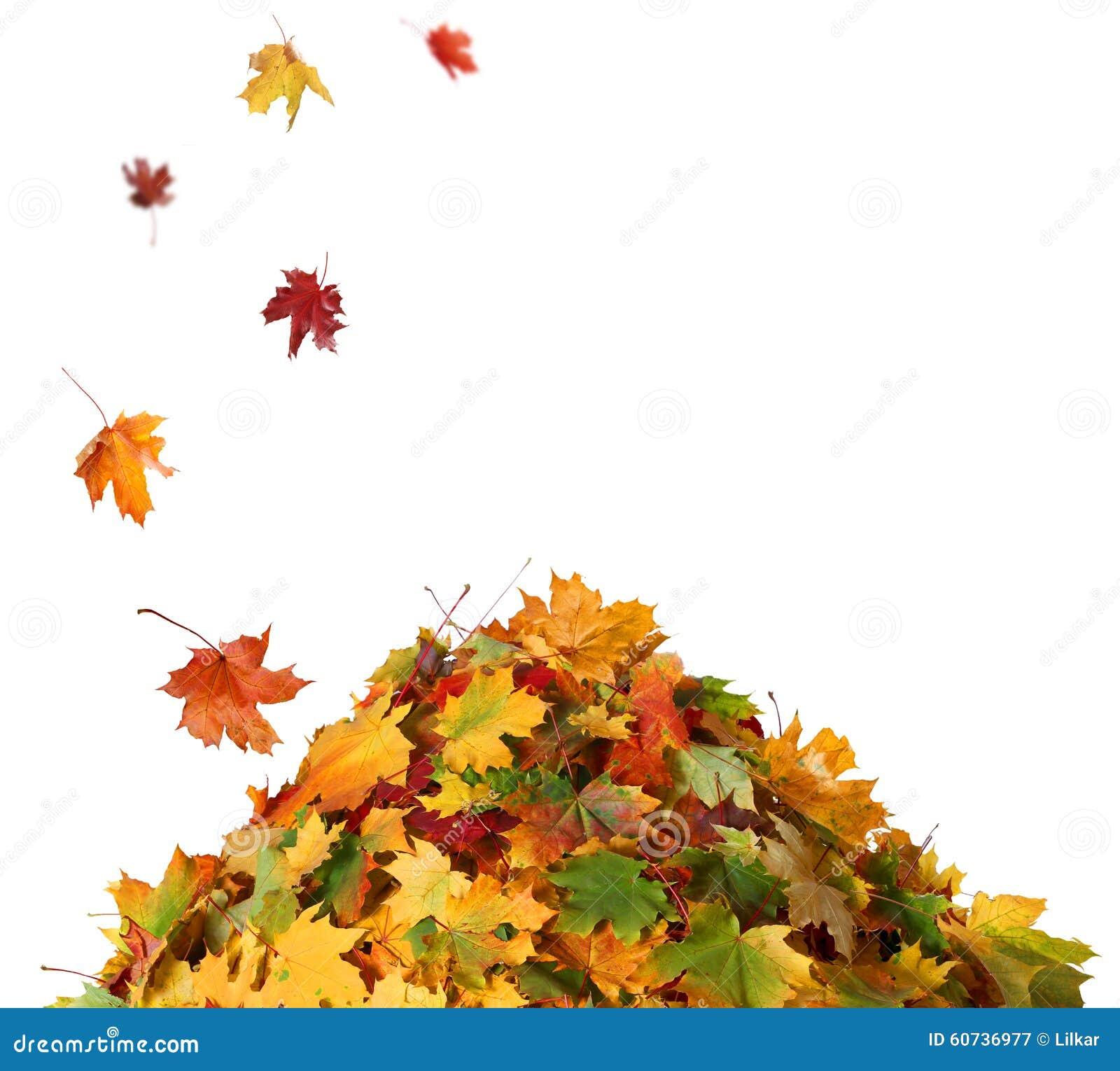 Pile des feuilles d automne