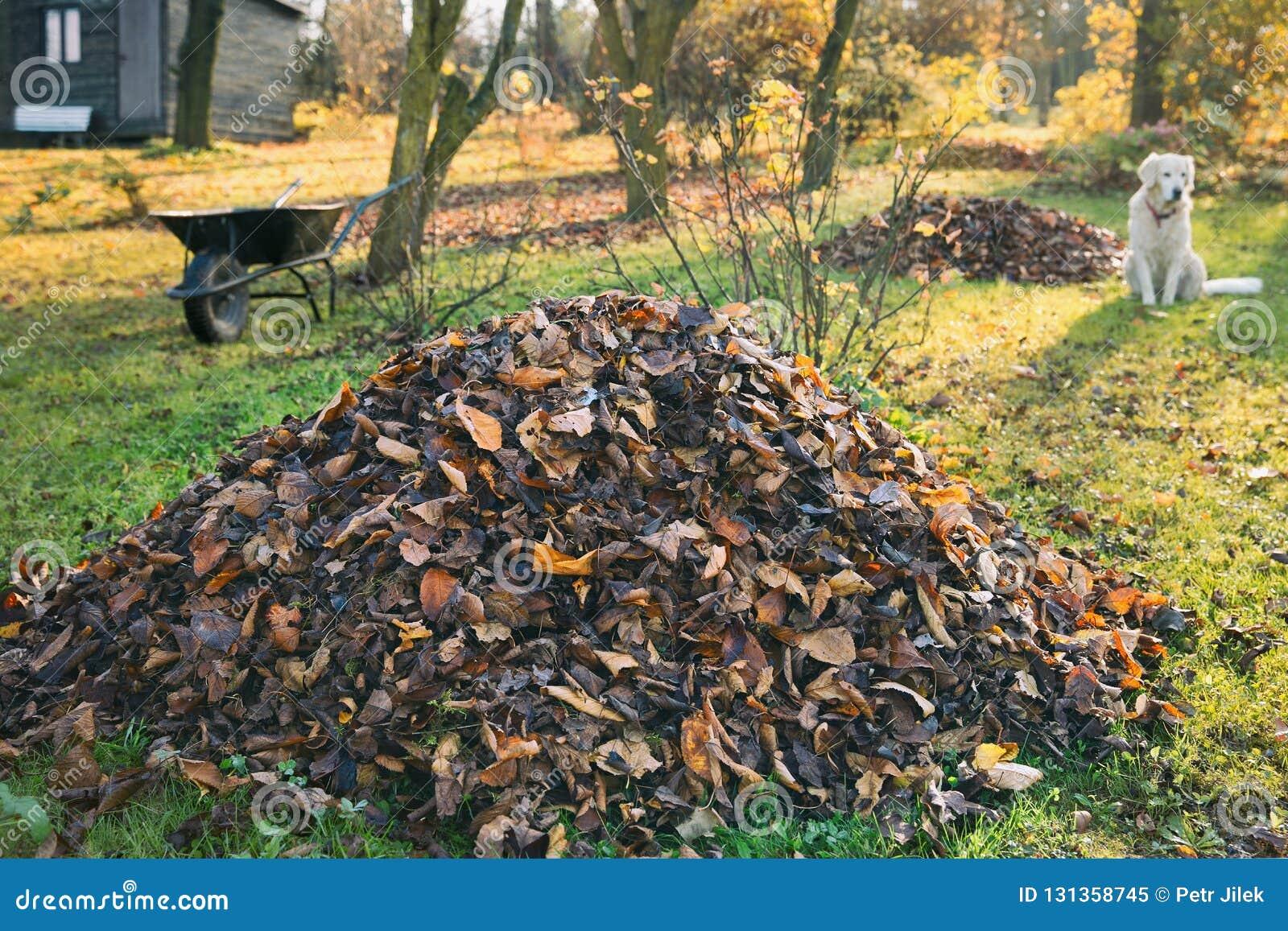 Pile des feuilles tombées dans une cour