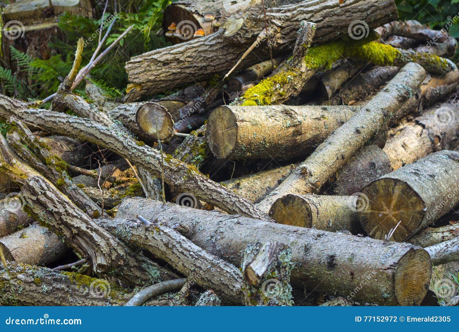 Pile des rondins en bois