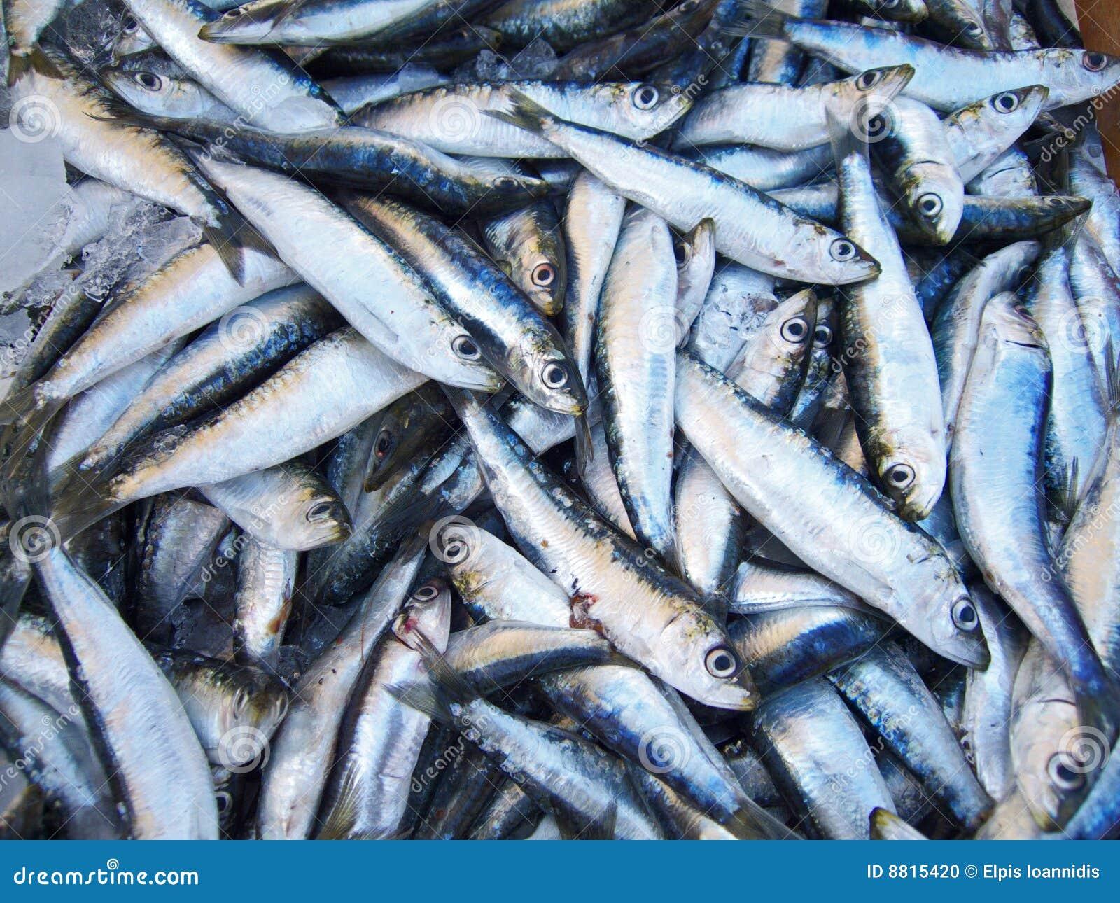 Pile des sardines photo stock image 8815420 - Cuisiner des filets de sardines fraiches ...
