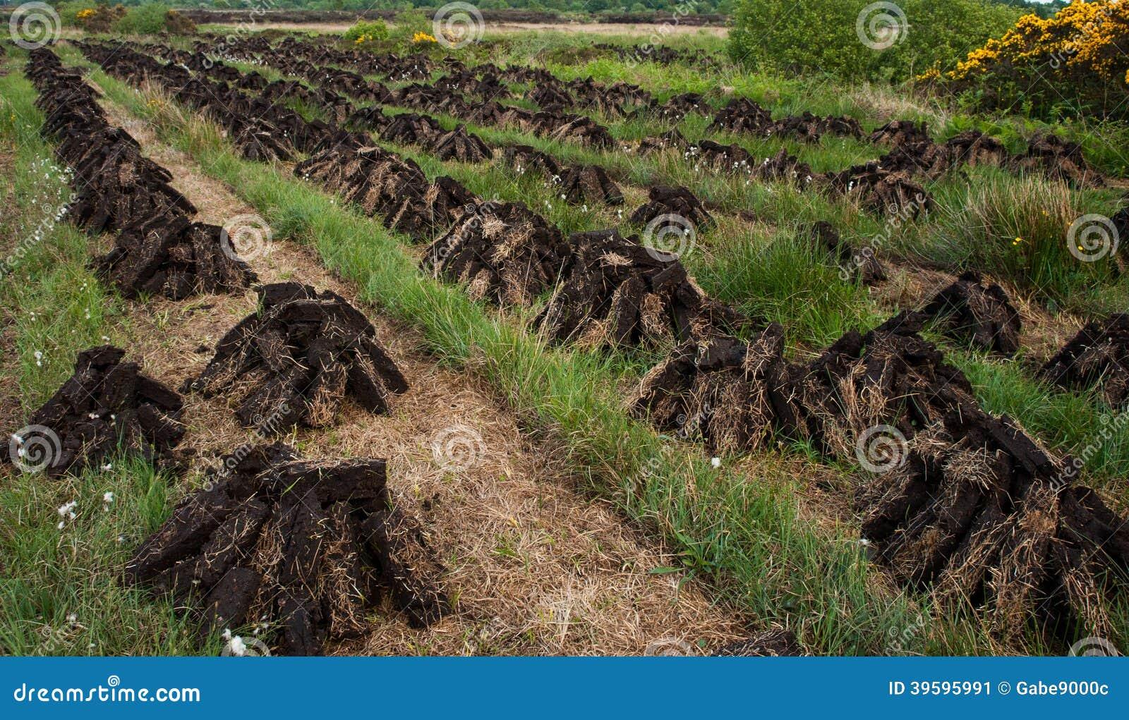 Pile di essiccazione del tappeto erboso in palude di torba for Tappeto erboso a rotoli prezzi