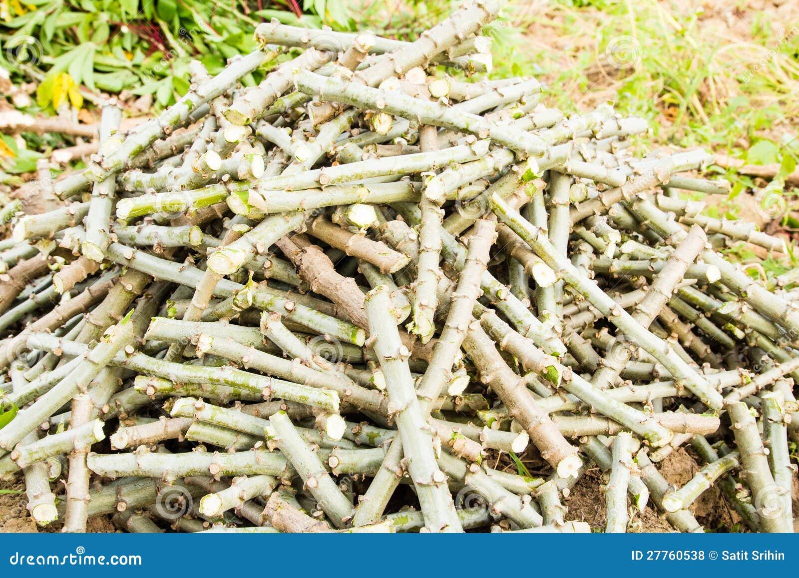 Pile du découpage de joncteur réseau de manioc