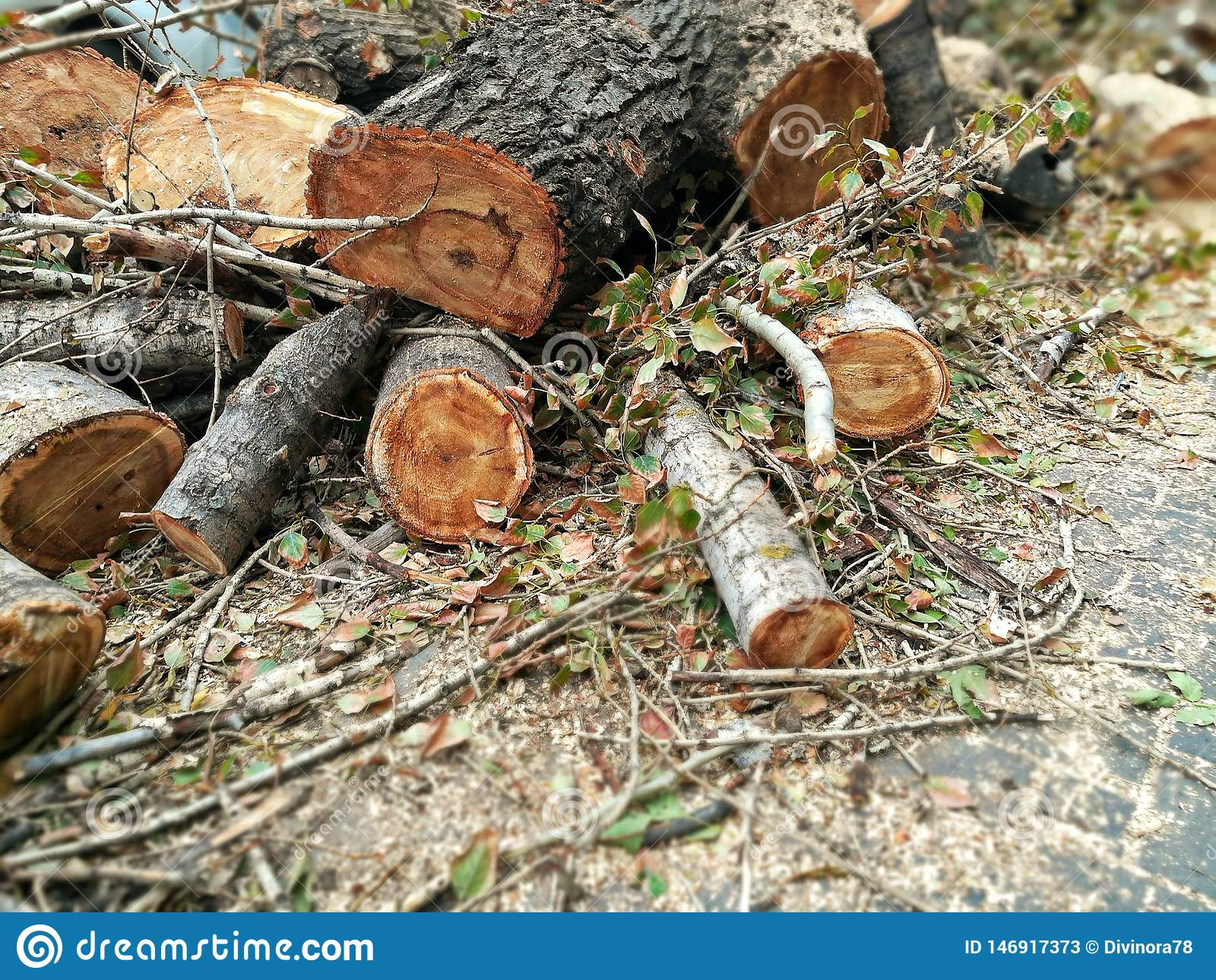 A pile of felled trunks of old trees