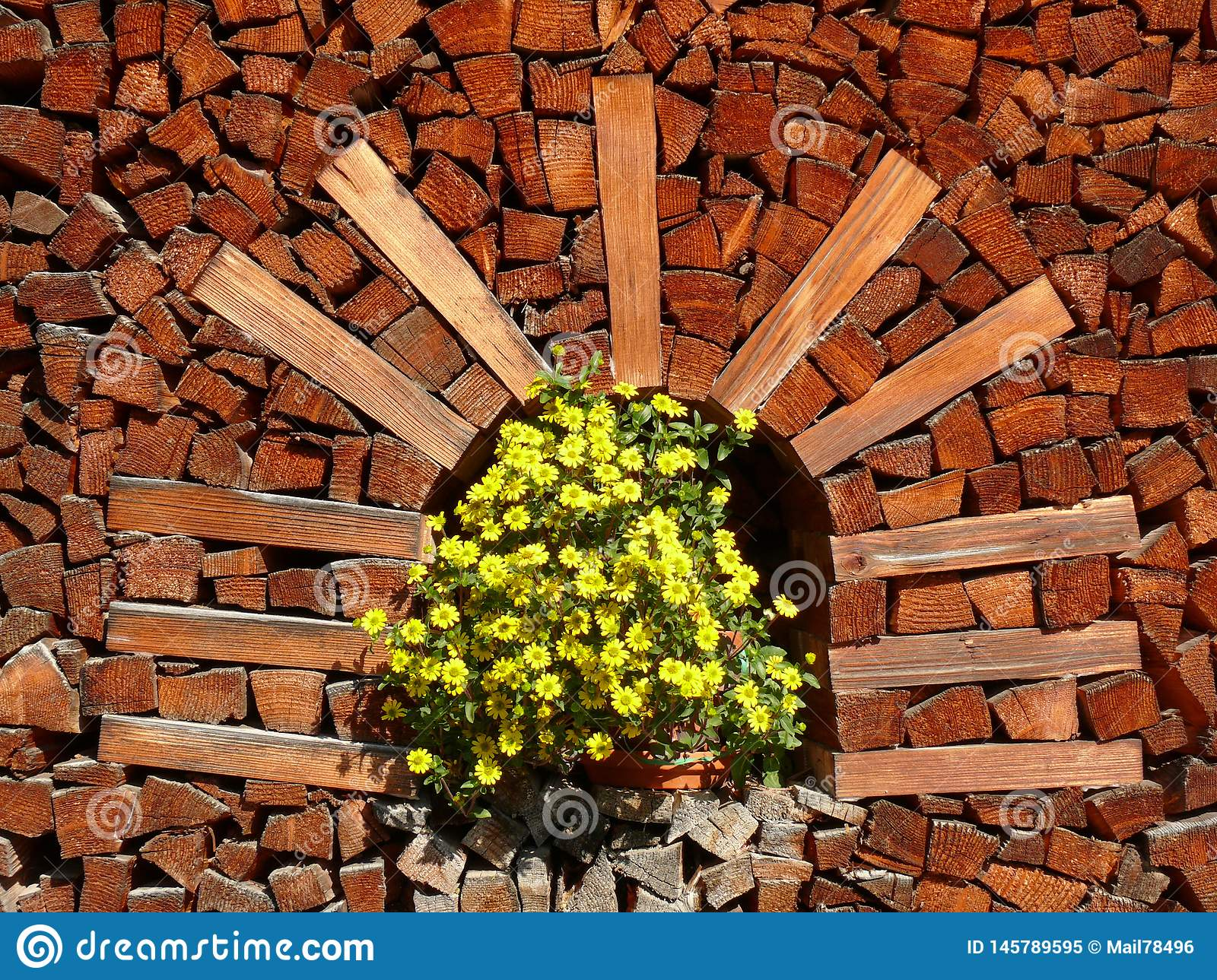 Pile of firewood with vase of yellow flowers