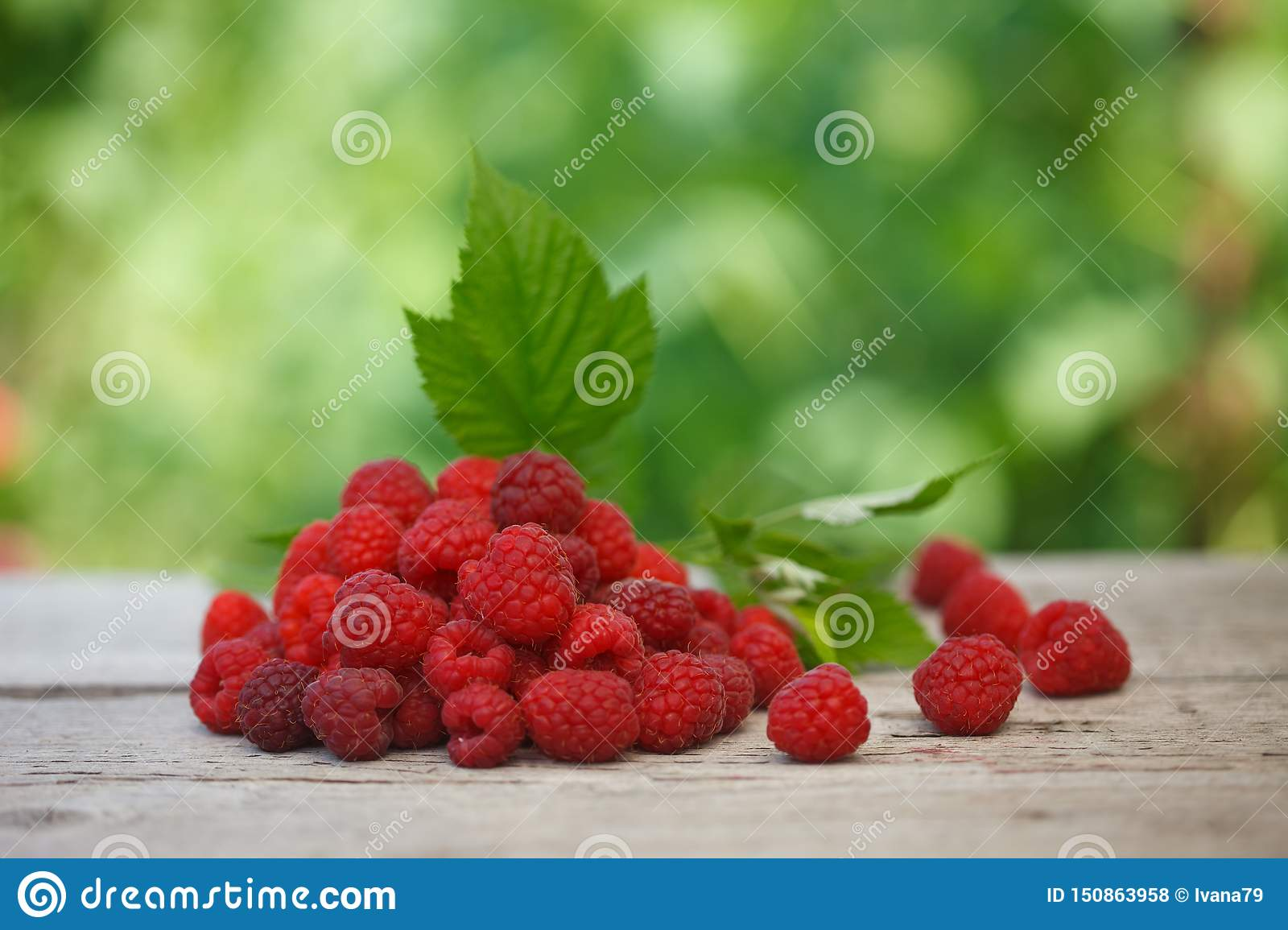 Pile of fresh Red raspberries with raspberry leaf on old wooden table,