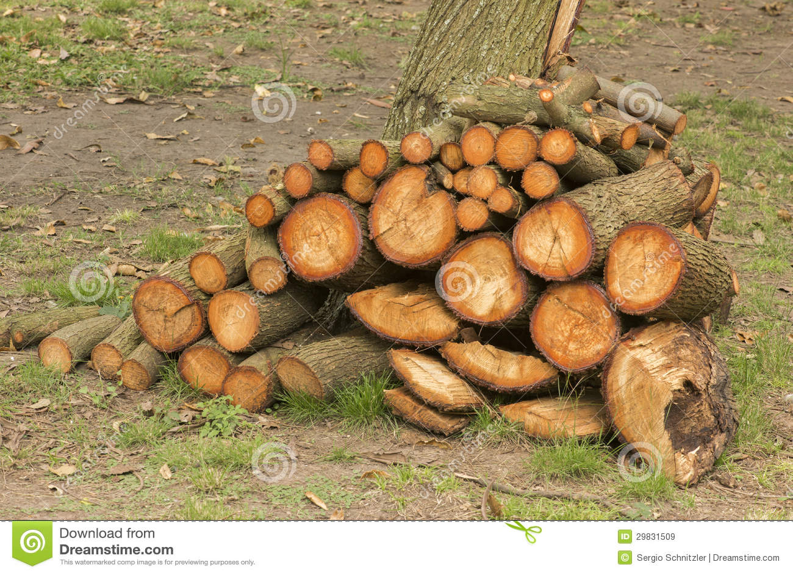 Red Oak Firewood - m