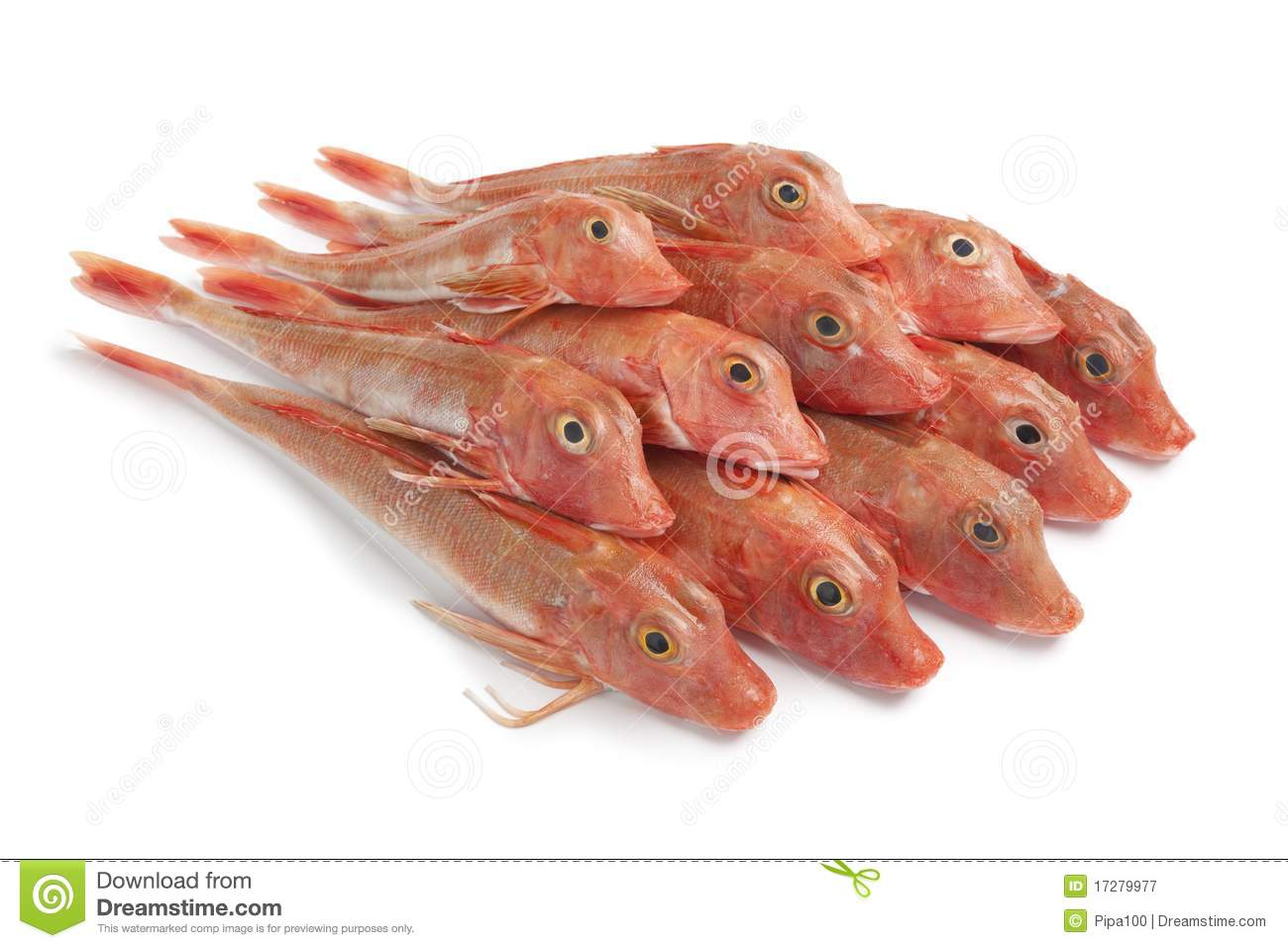 Pile Of Red Tub Gurnard Fishes Royalty Free Stock Photography - Image ...: www.dreamstime.com/royalty-free-stock-photography-pile-red-tub...