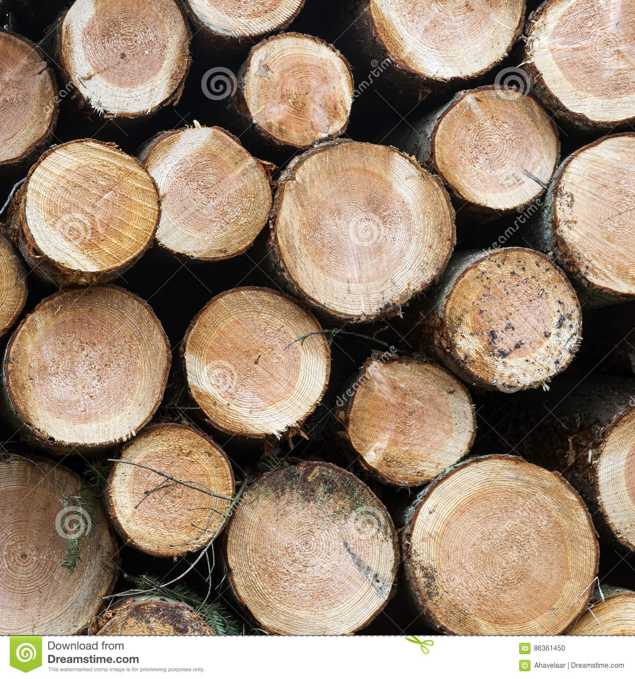 Pile of small cut trunks of spruce tree wood