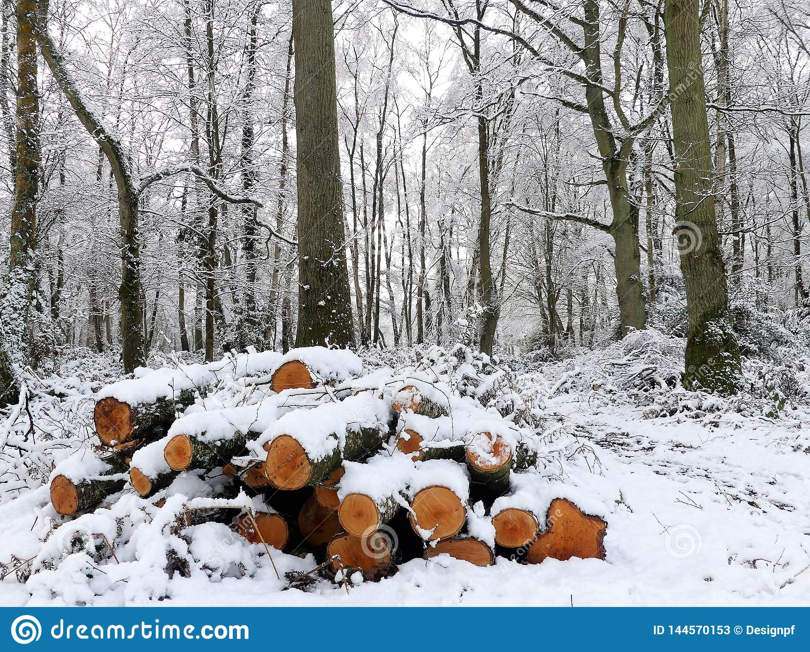 Pile of snow covered logs, Chorleywood Common, Hertfordshire