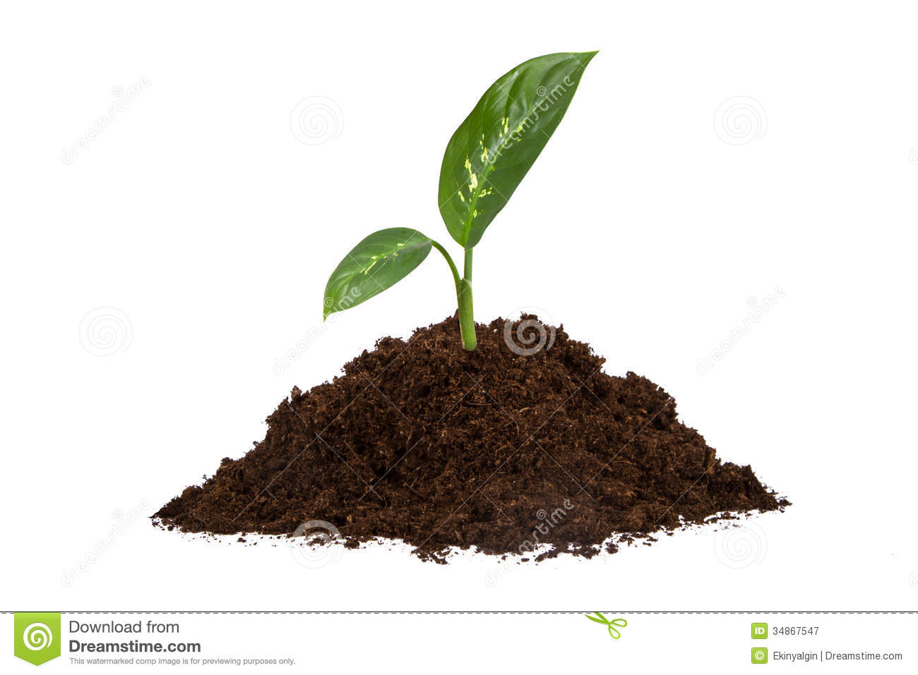 Pile of soil and green leaves royalty free stock for Soil and green