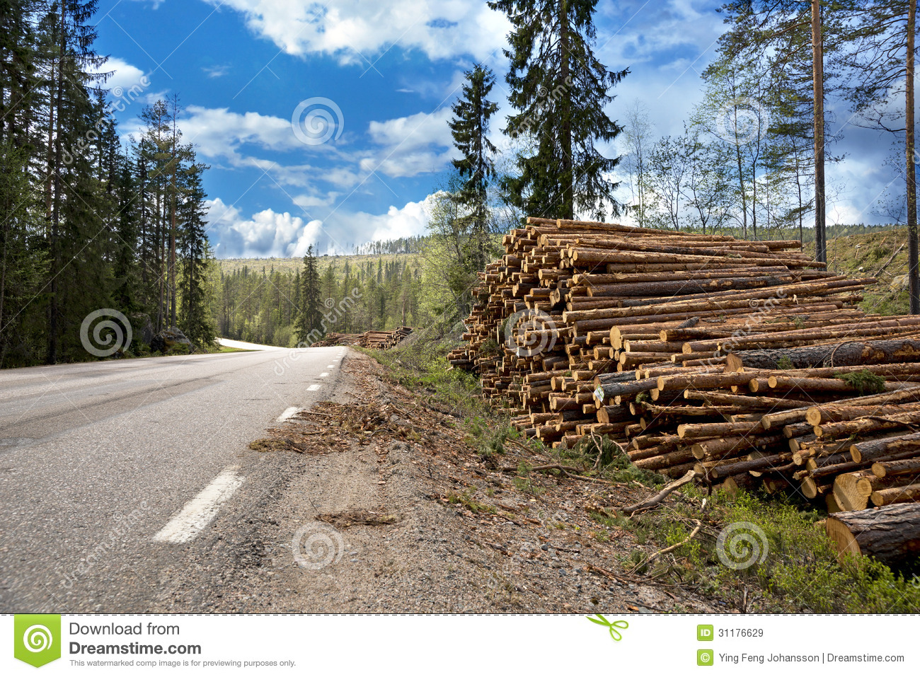 Pile Of Timber : Pile of timber royalty free stock images image