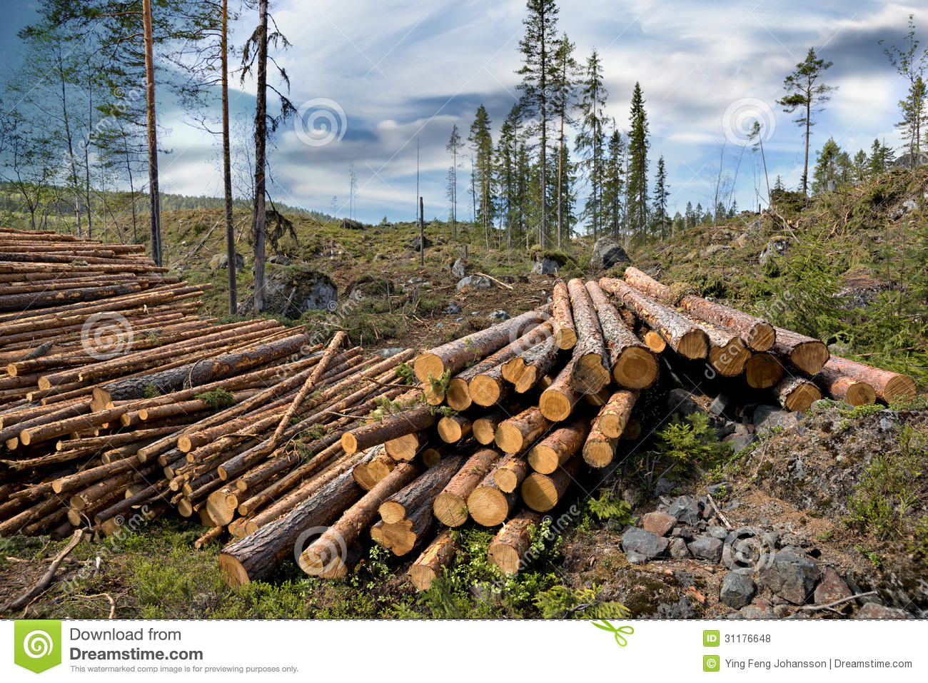 Pile Of Timber : Pile of timber royalty free stock photos image