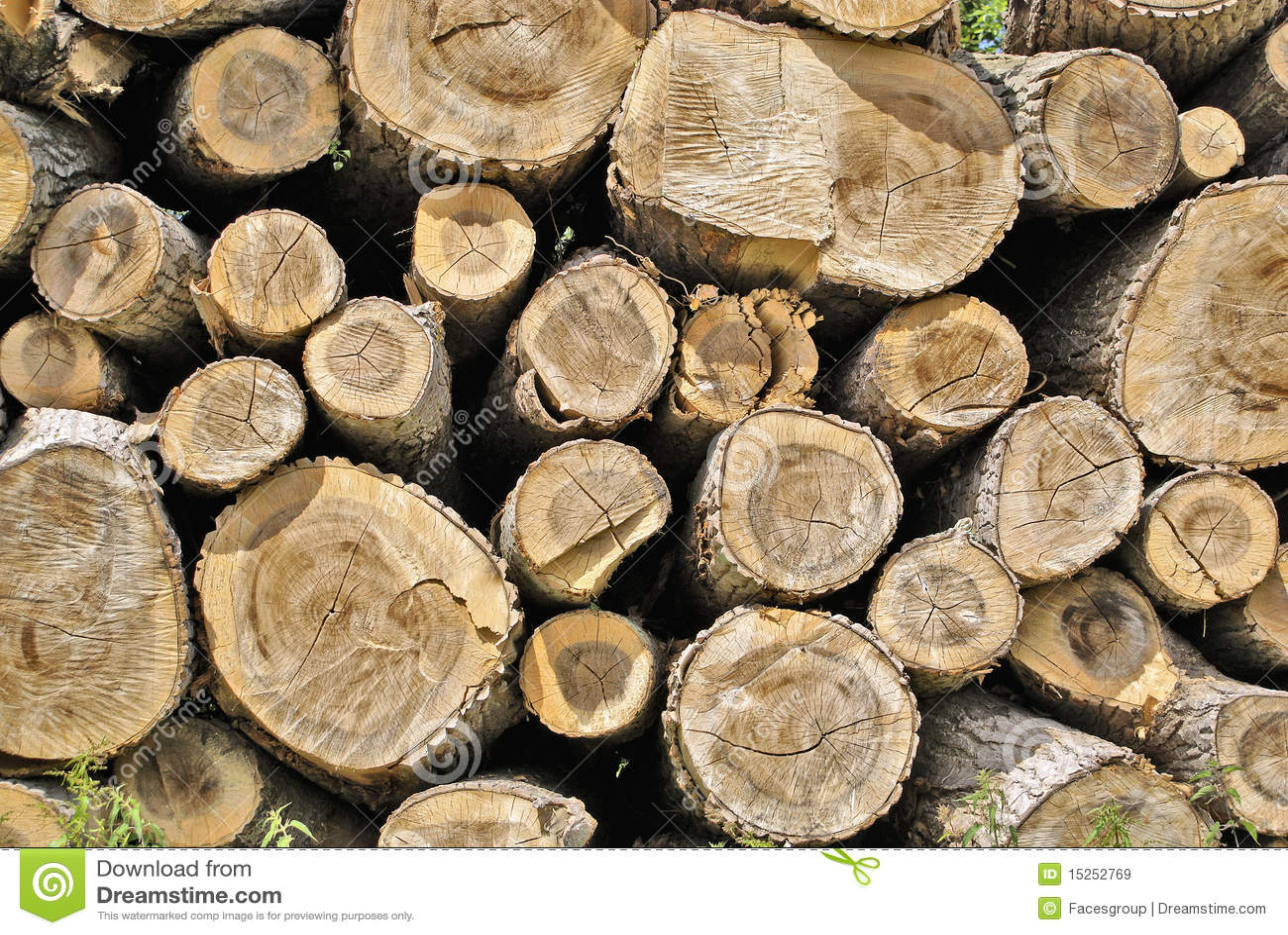 Download Pile of Wood stock image. Image of energy, macro, growth - 15252769